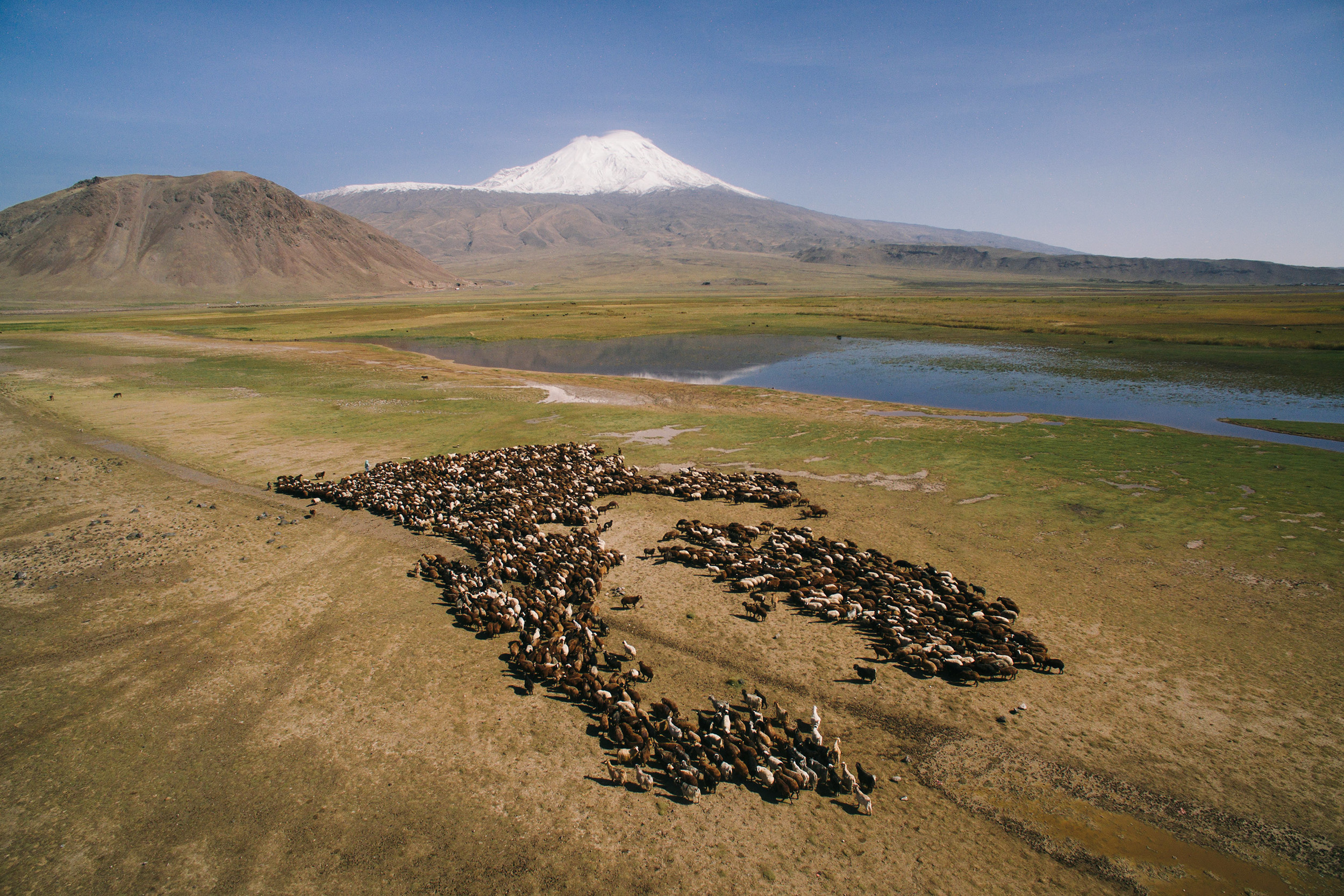 Aerial view of sheep and Mount Ararat in the background