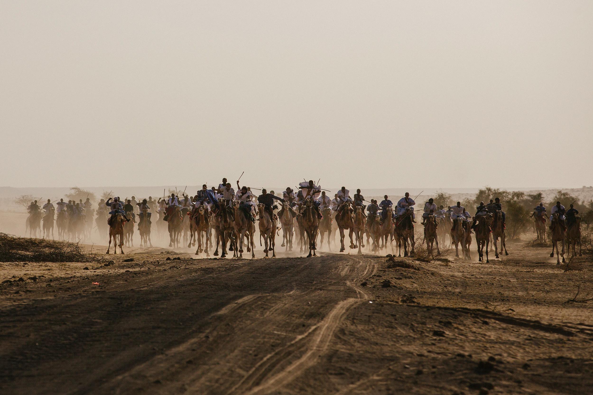 Camel race begins