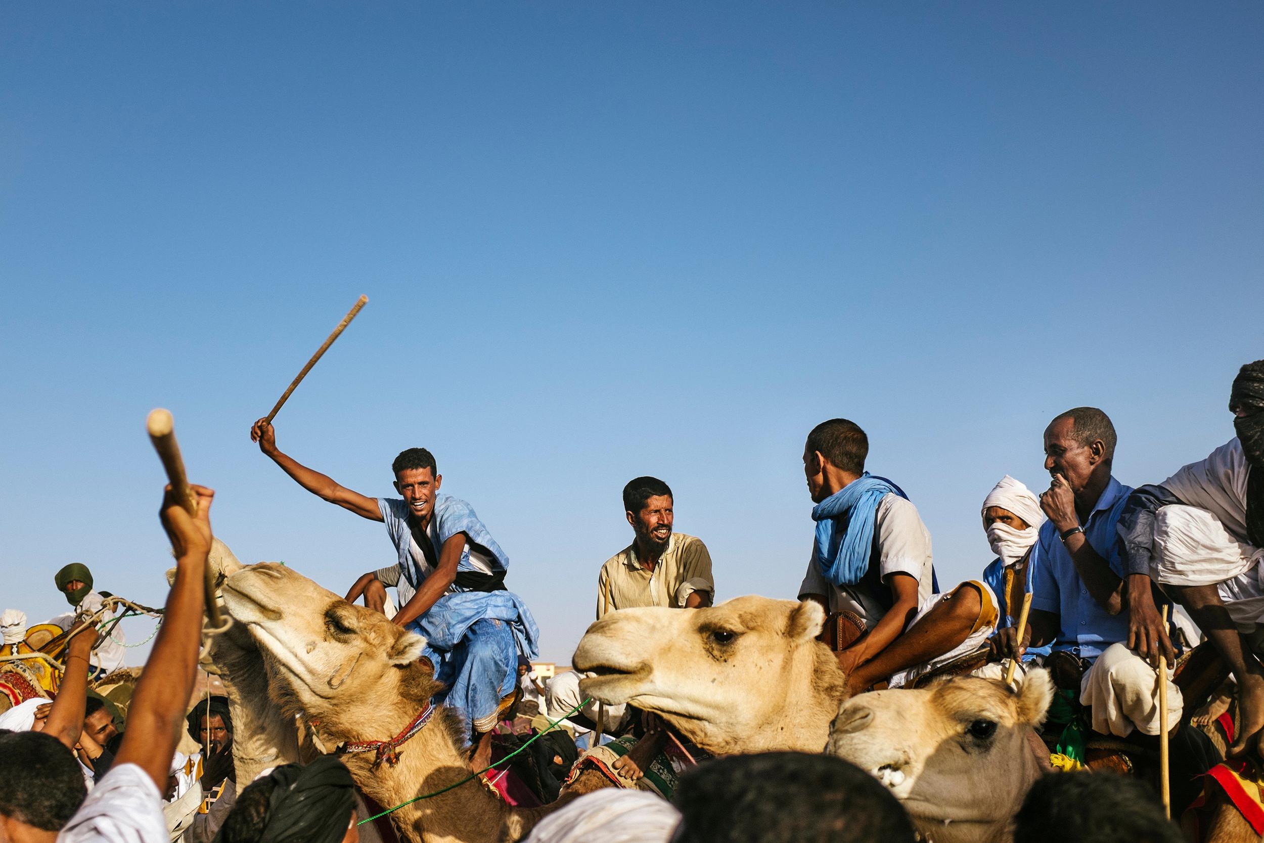 Camel race winner circle