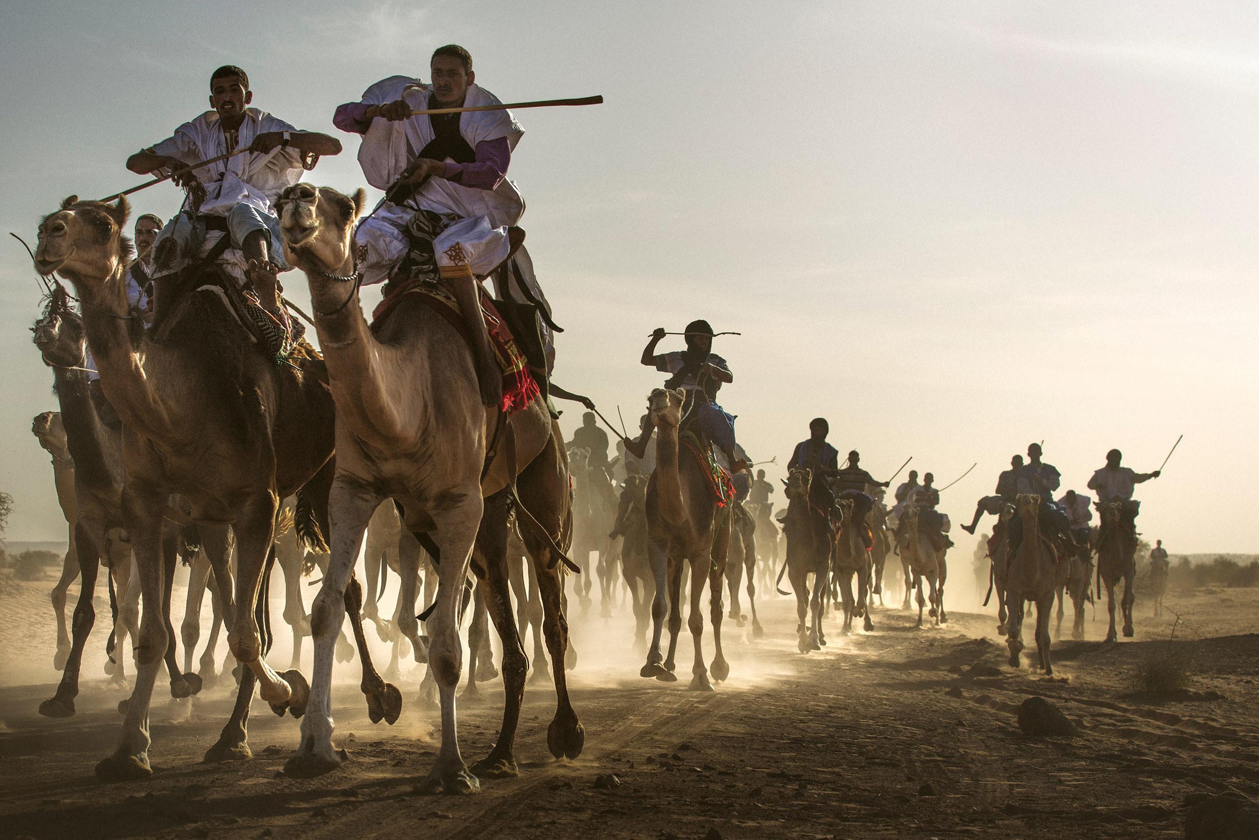 Camel race gets intense