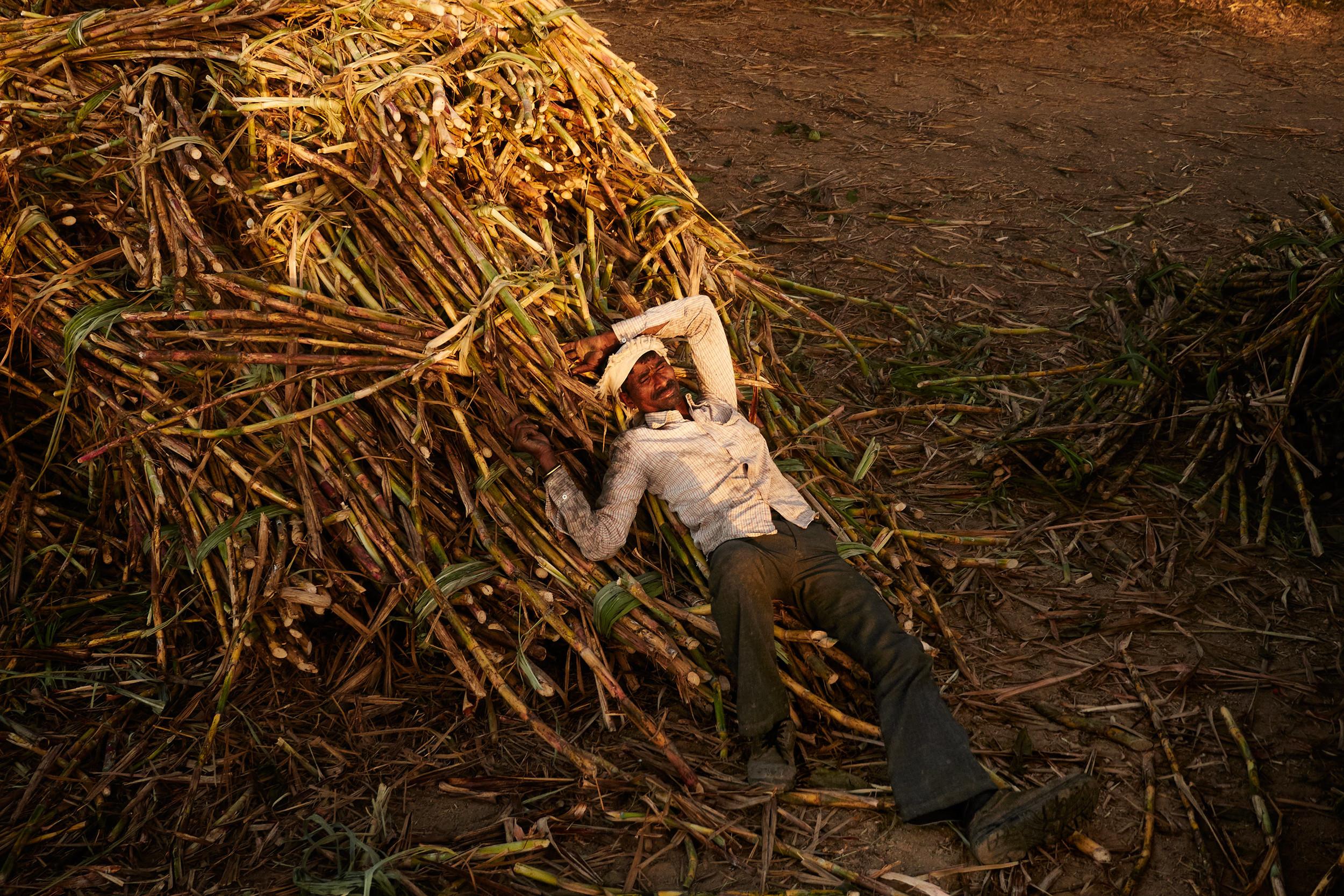 Sugarcane worker taking a rest