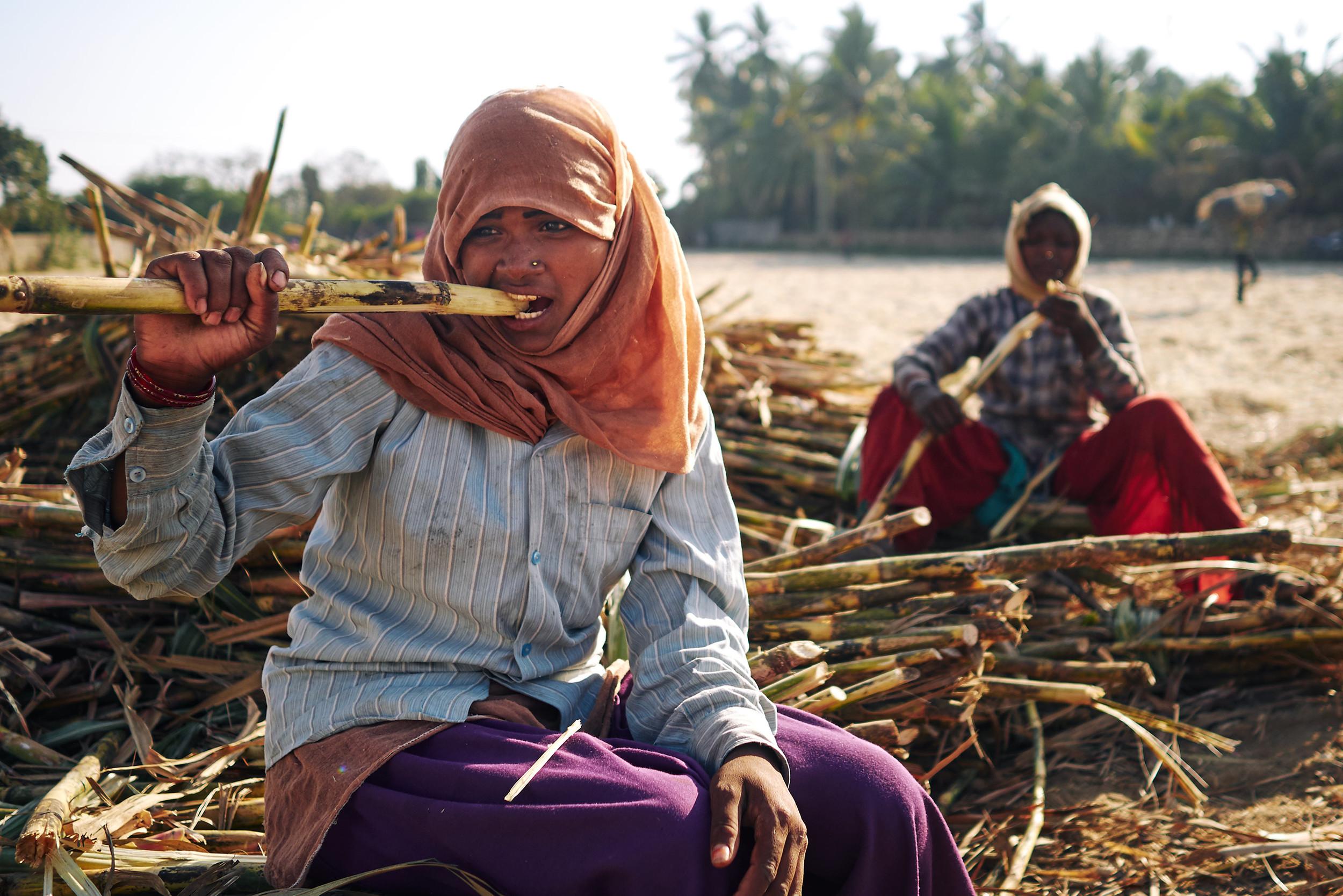 Sugarcane workers eating sugarcane during a break