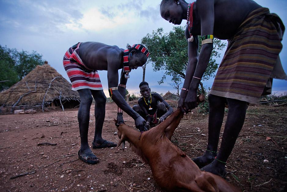 Hamer men killing a goat