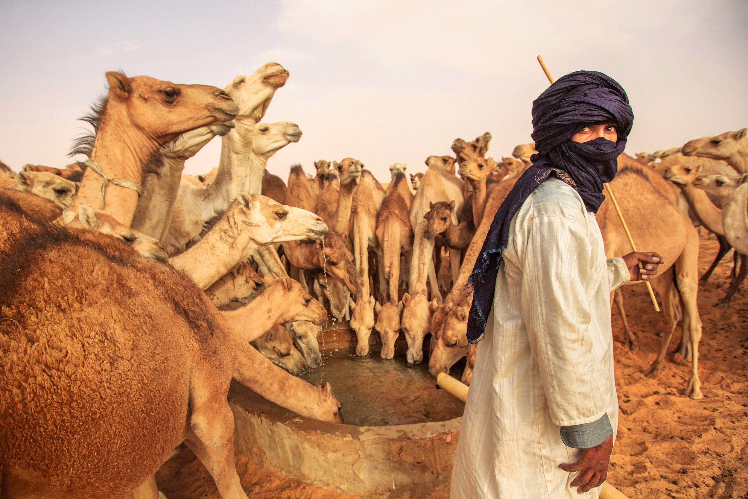 Camel man with his camels in Mauritania