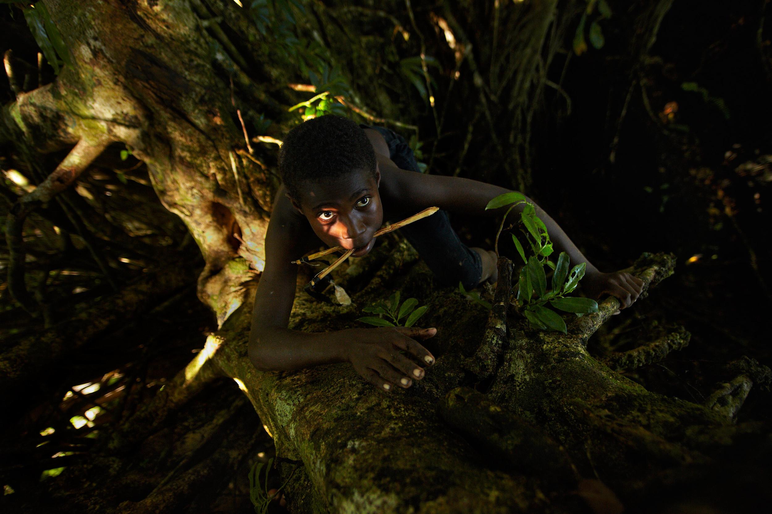 Boy climbing a tree in Vanuatu