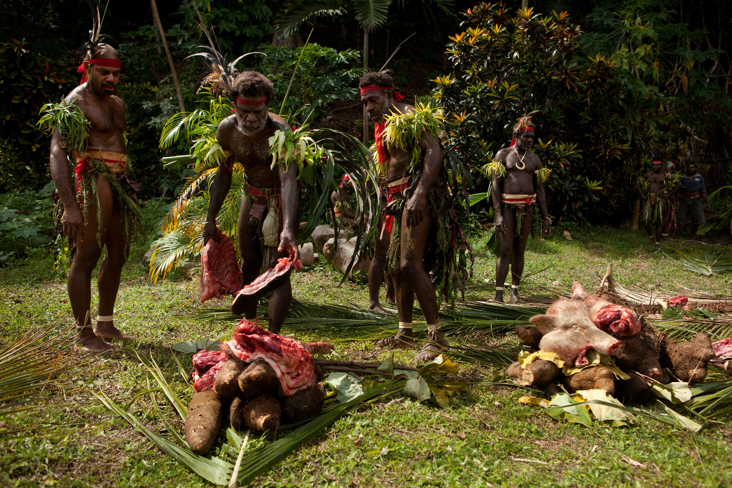 South West Bay chiefs distributing pig meat at Nalawan festival and grade-taking ceremony.