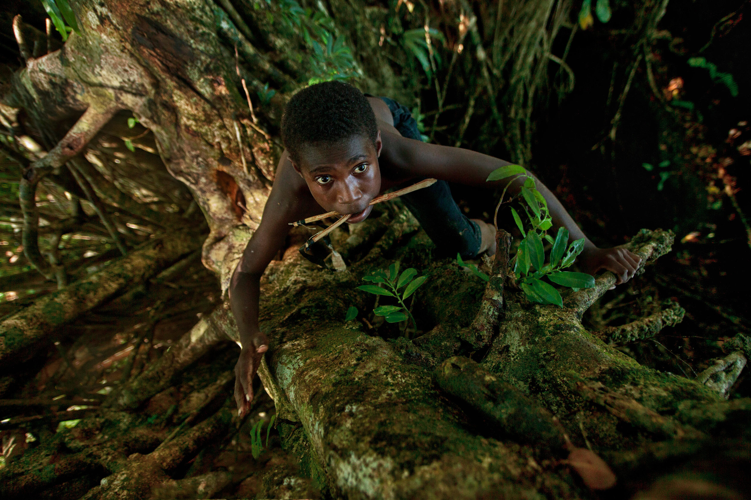 Teenage-Ni-Vanuatu-boy-climbing-a-banyan-tree---view-from-above.jpg