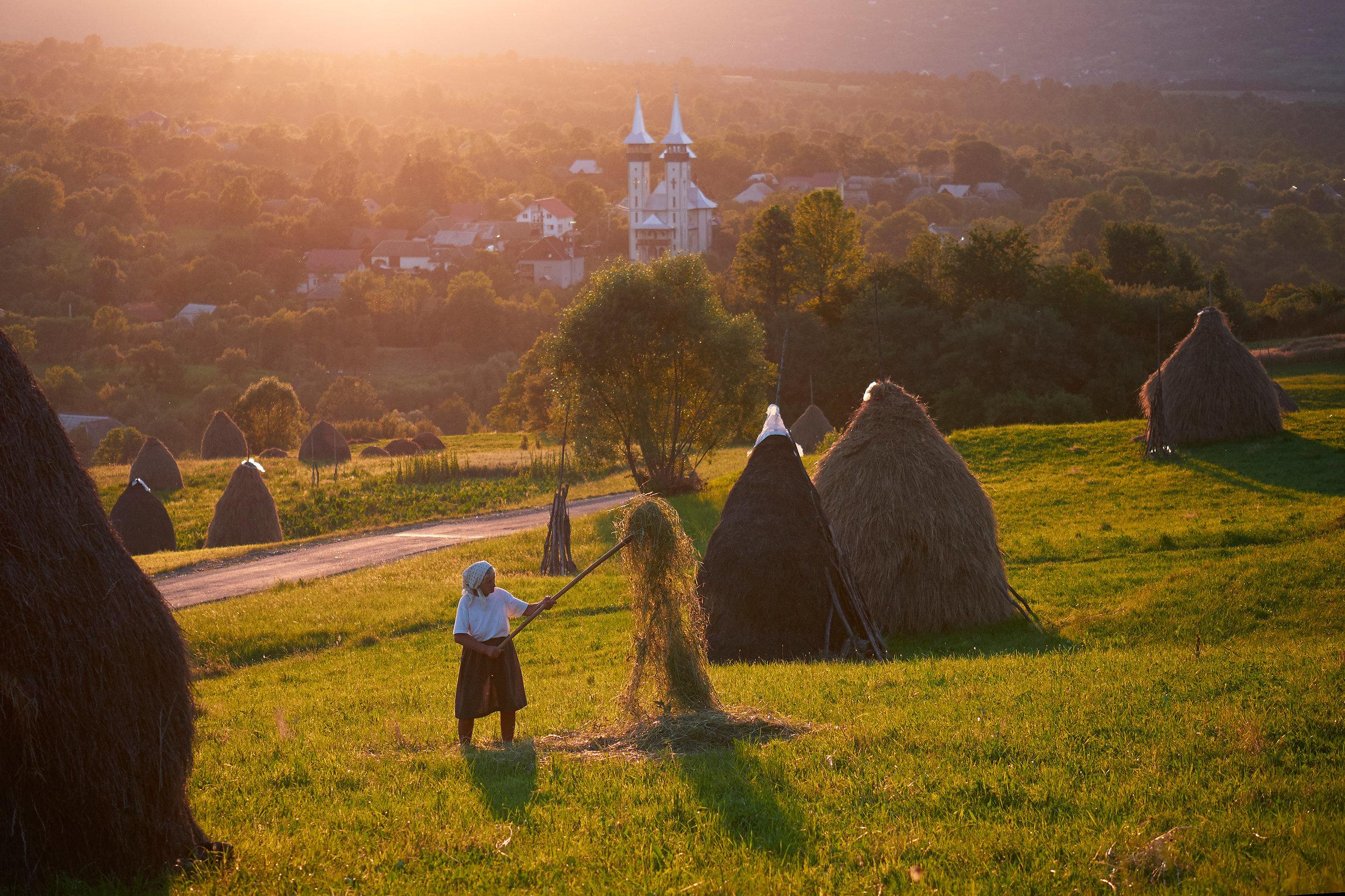 Romania-Maramures-grandmother-stacking-hey