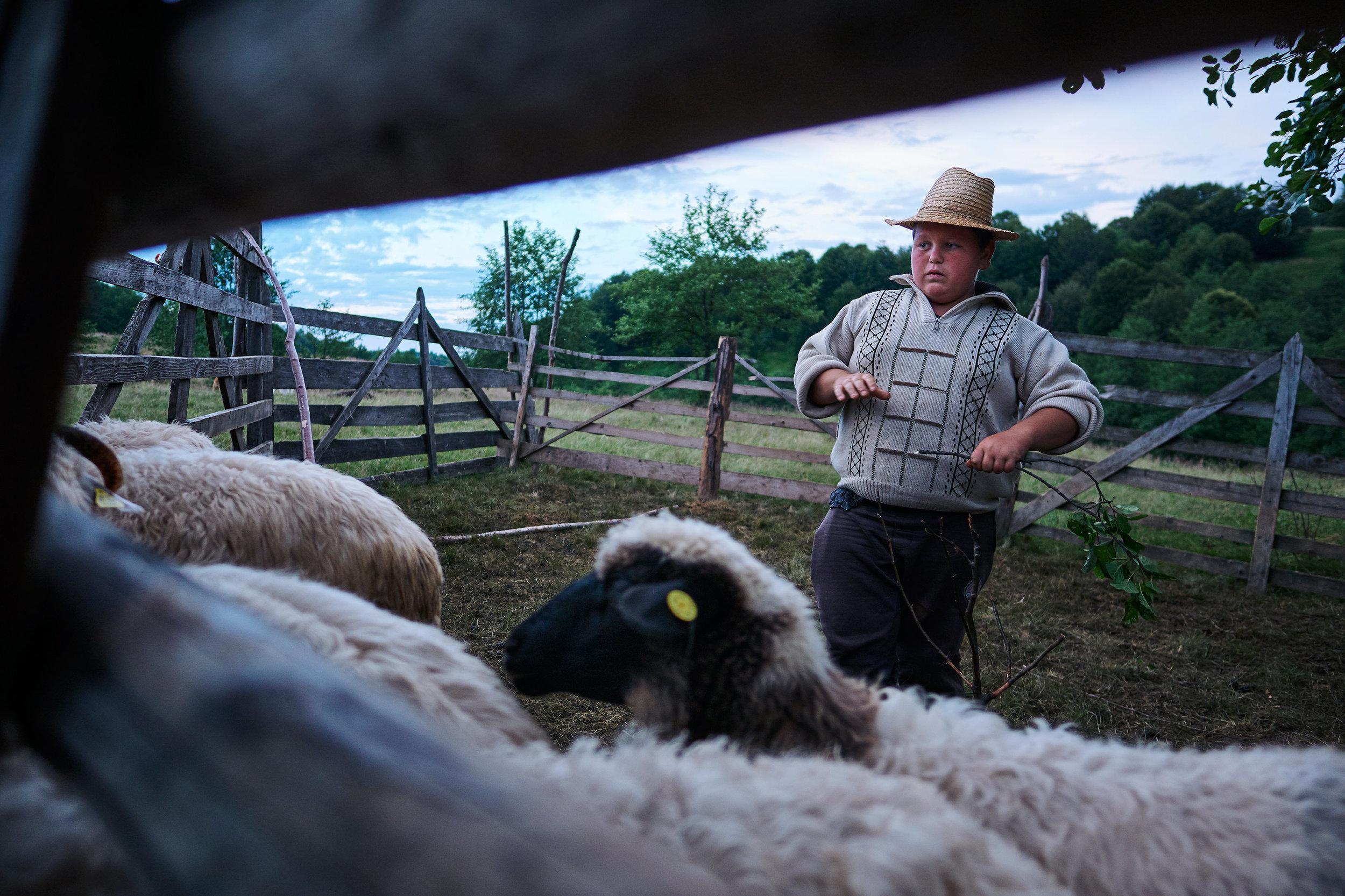 Romania-Maramures-boy-with-sheep
