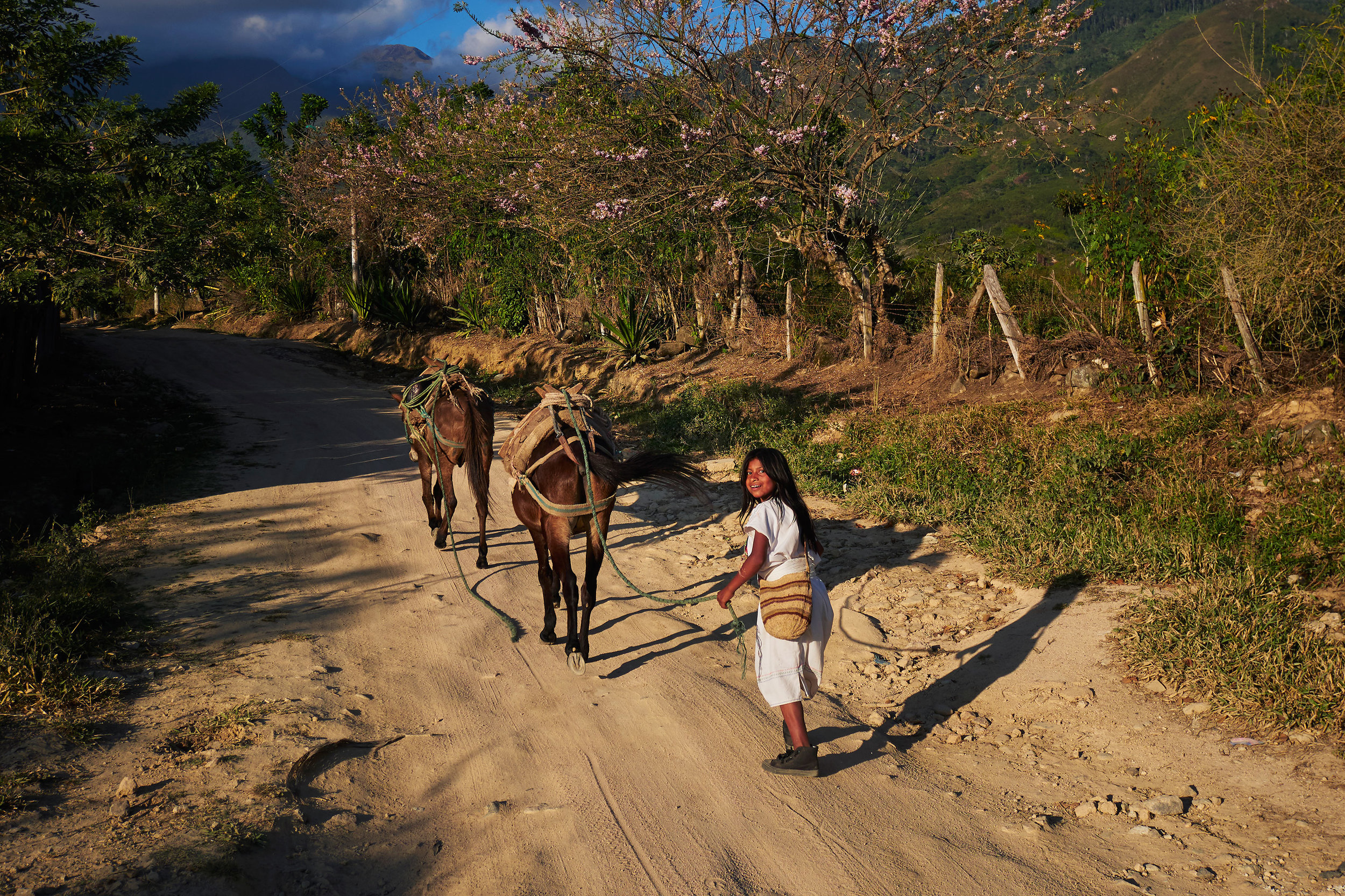 Colombia-travel-Pueblo-Bello-Arhuaco-girl-with-mules