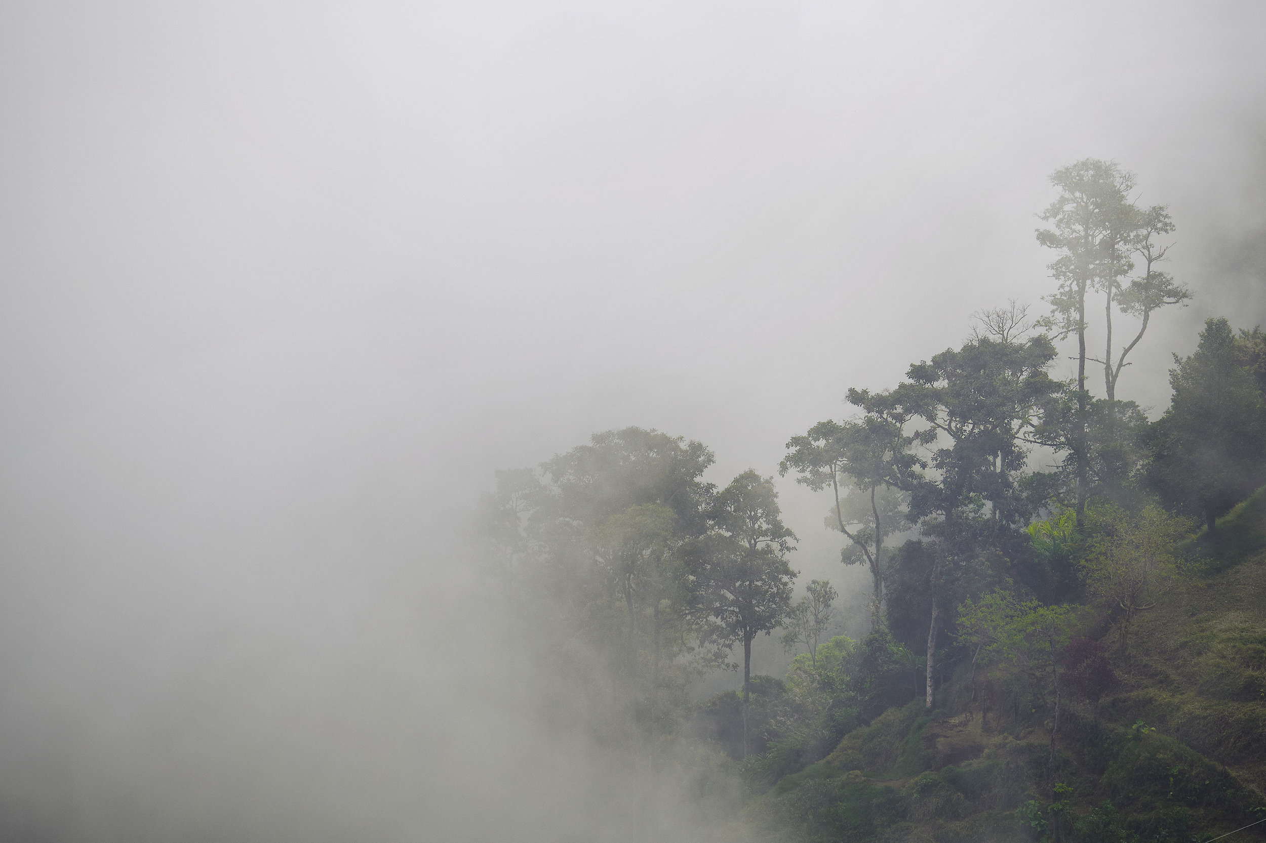 Colombia-travel-zona-cafetera-trees-in-fog