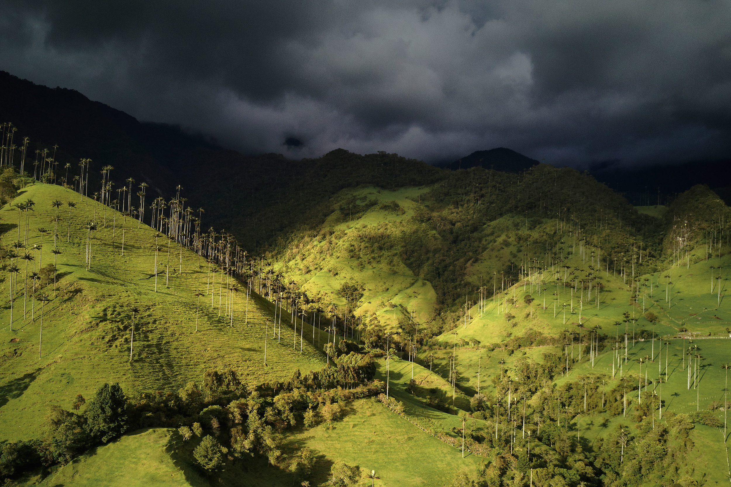 Colombia-travel-valle-Cocora-palms