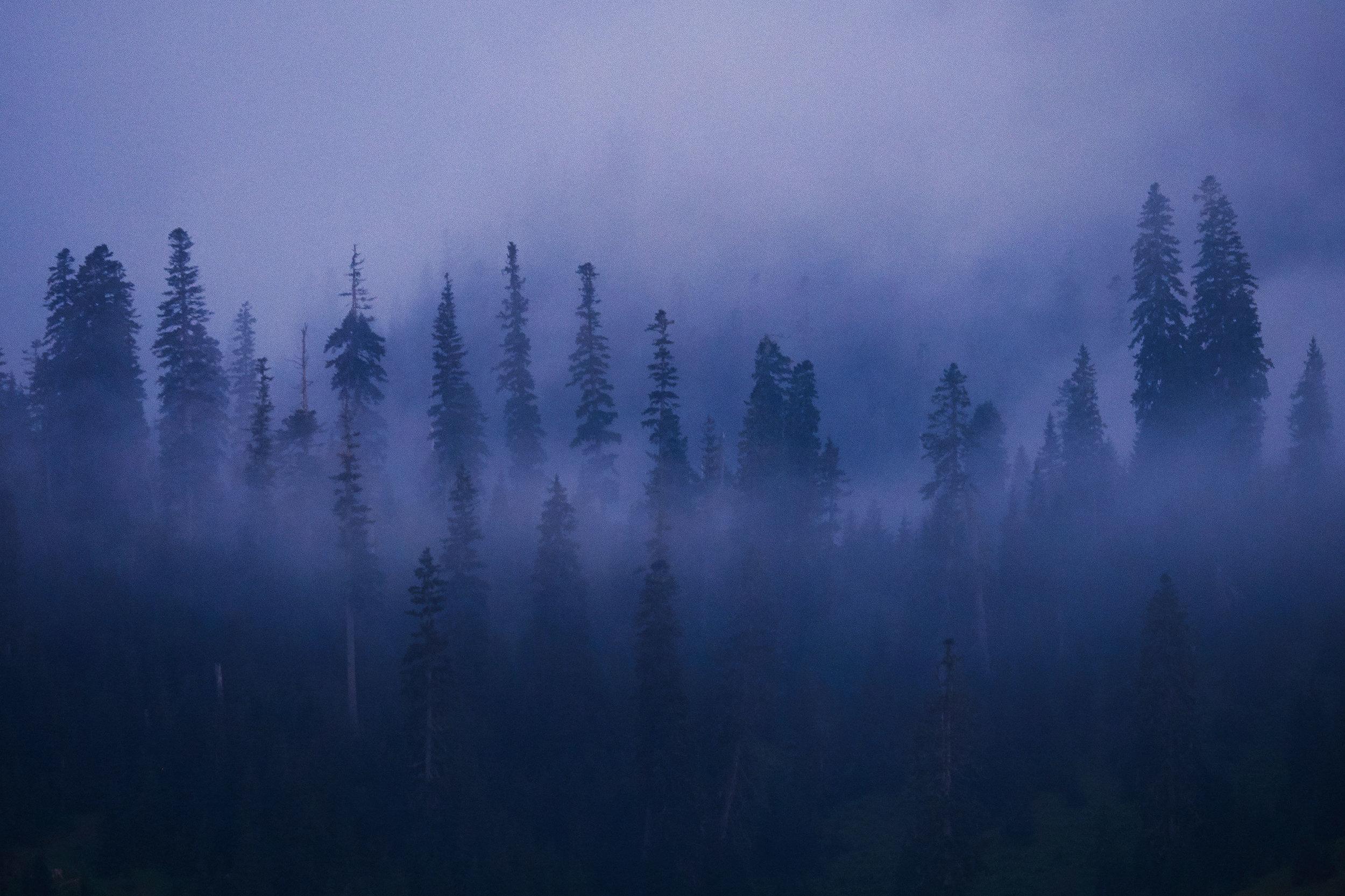 Bakhmaro-Georgia-Fog-and-trees