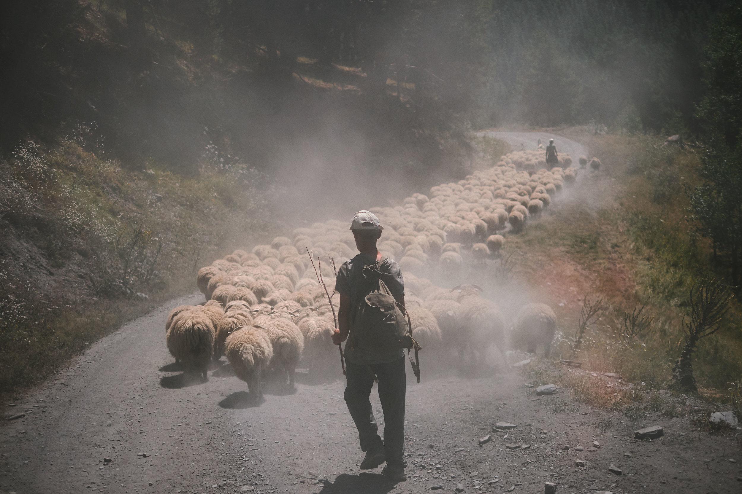 Tusheti-Georgia-Sheep-traffic-jam