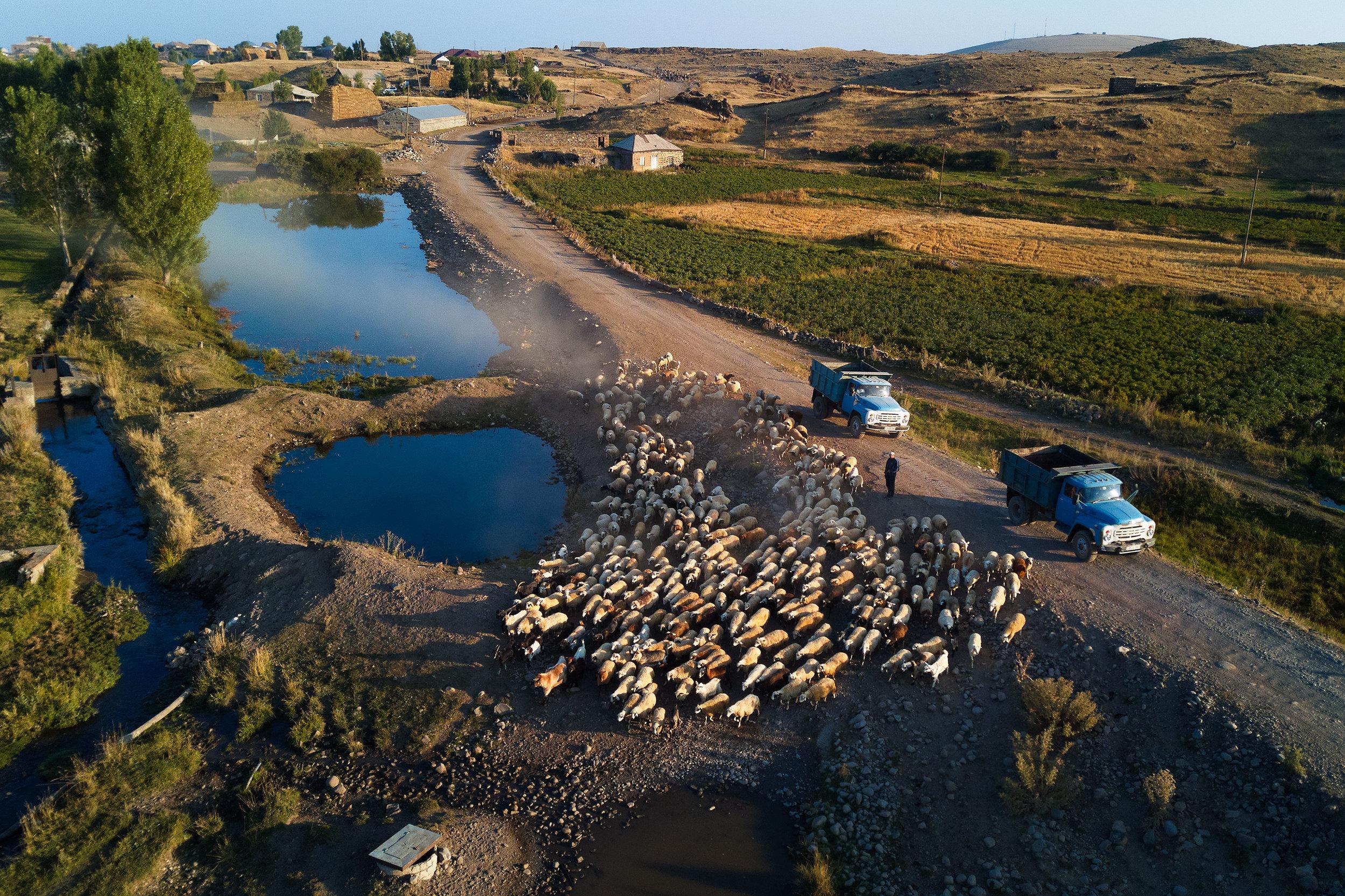 Armenia-mountains-sheep-cows-soviet-cars