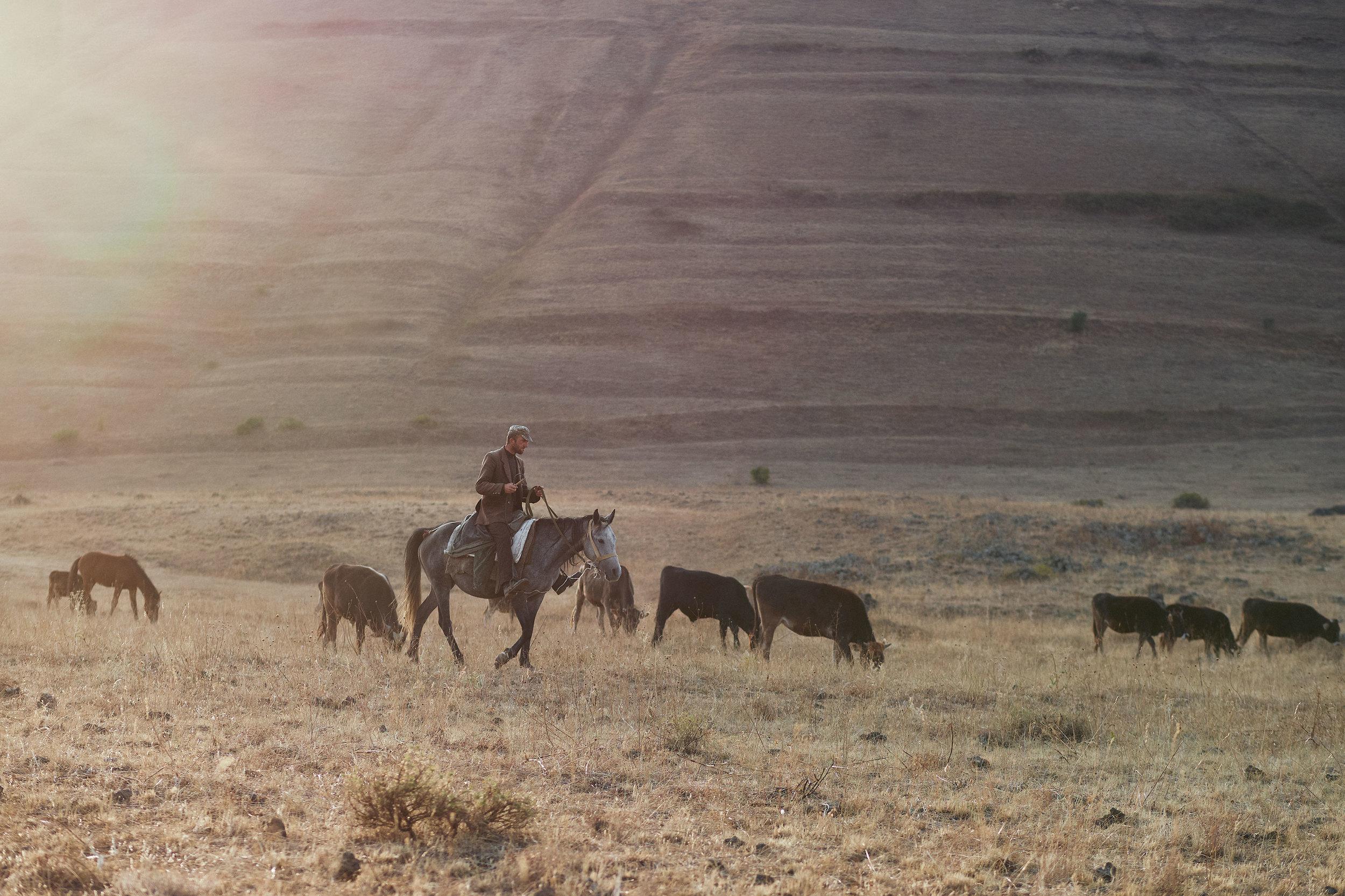 Armenia-Vayots-Sar-horseman-with-cattle