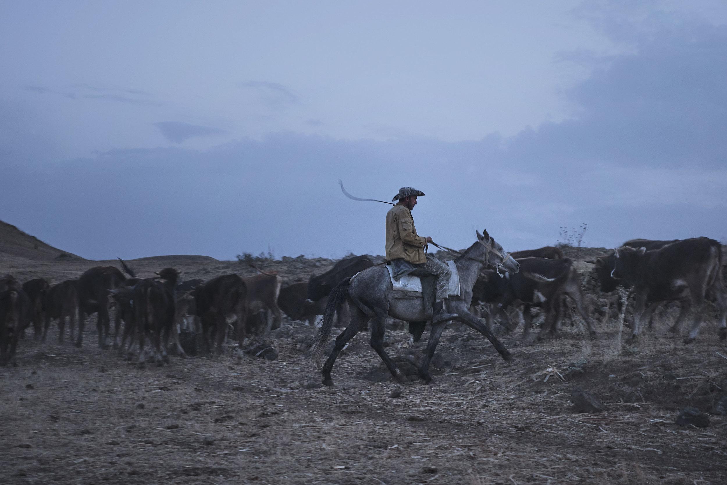 Armenian-shepherd-on-a-horse