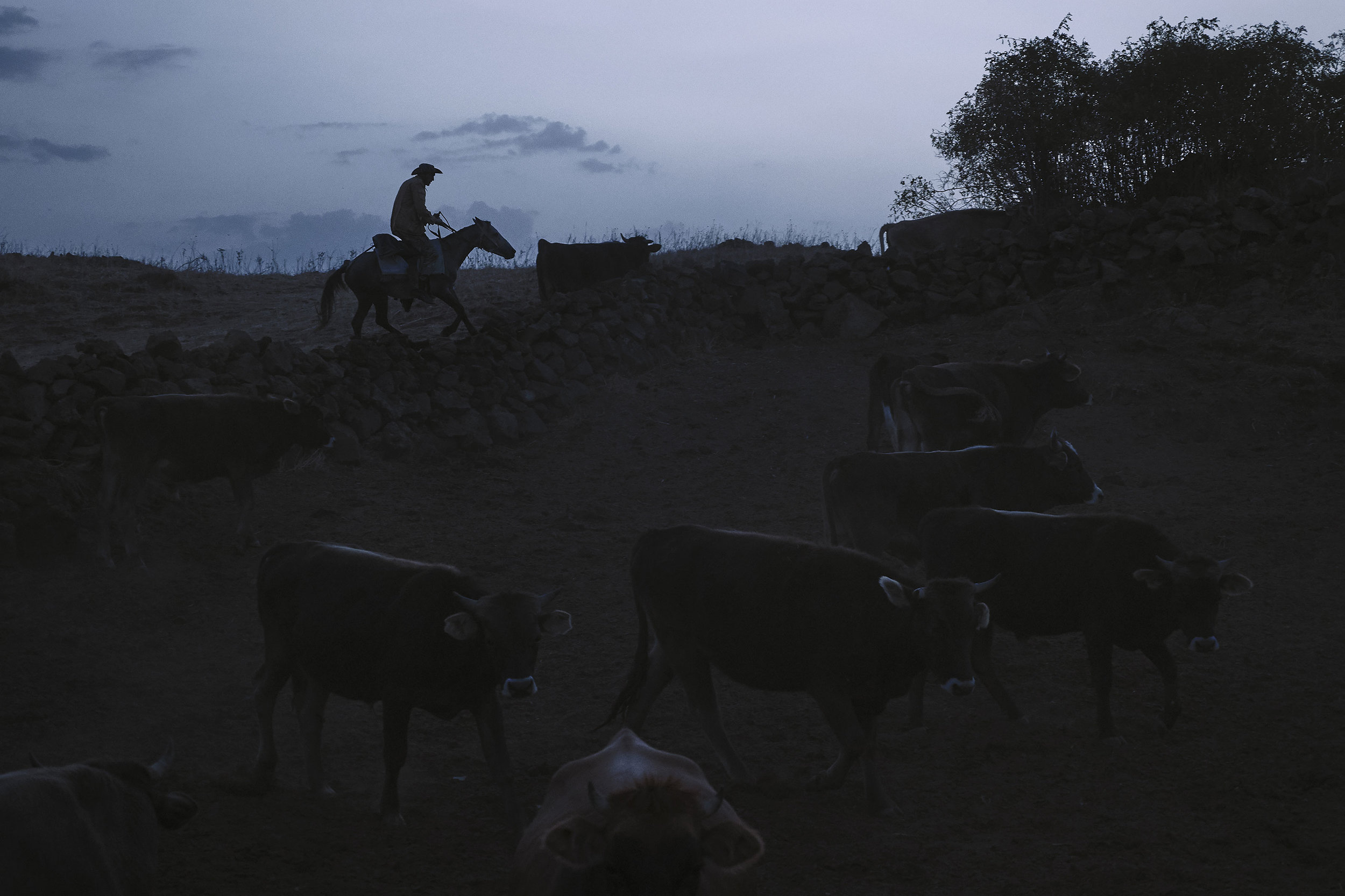 Armenia-Vayots-Sar-shepherd-taking-cows-in