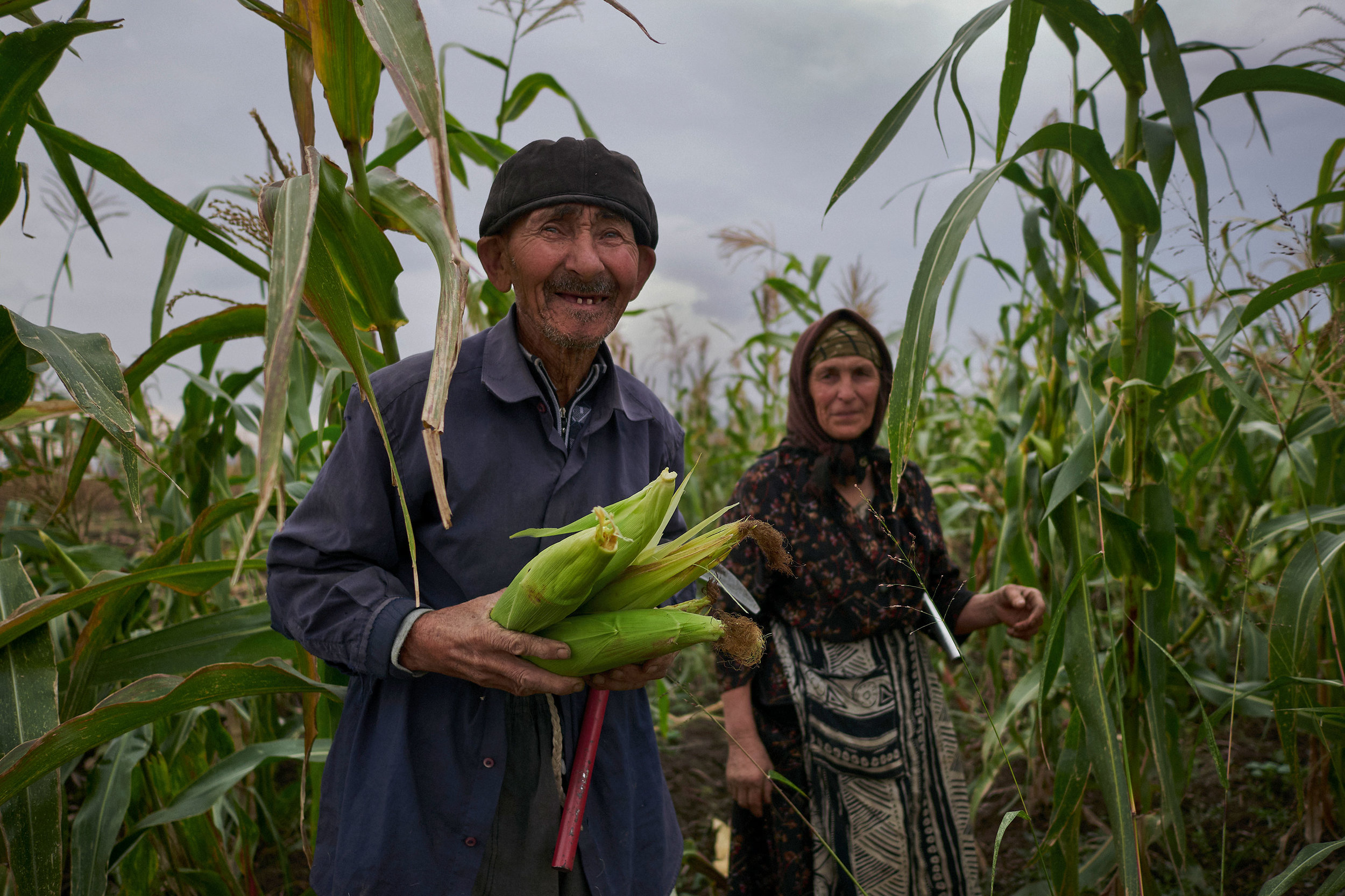 Elderly man and woman in a corn field