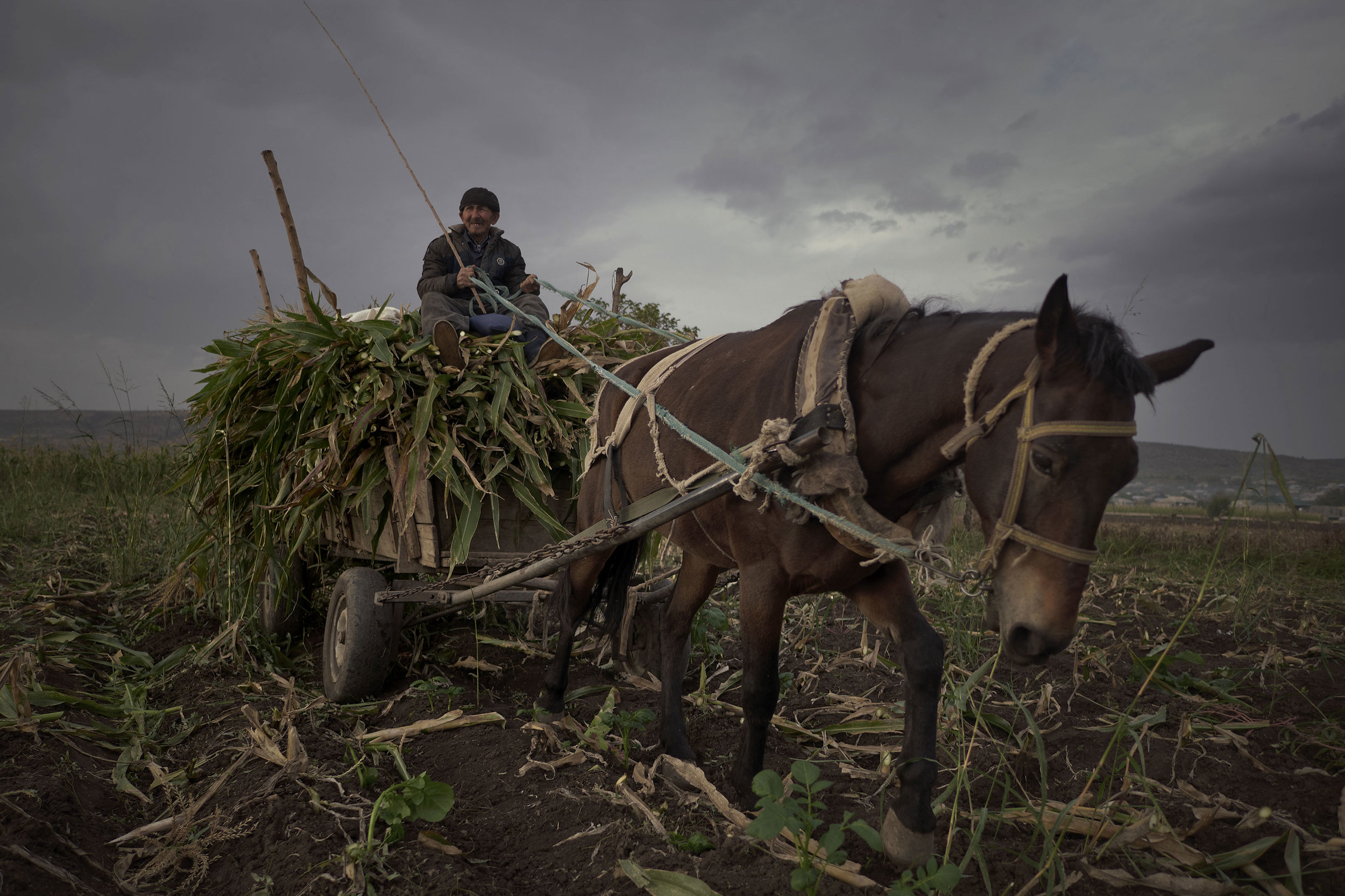 Azeri Georgian man on a horse with corn harvest