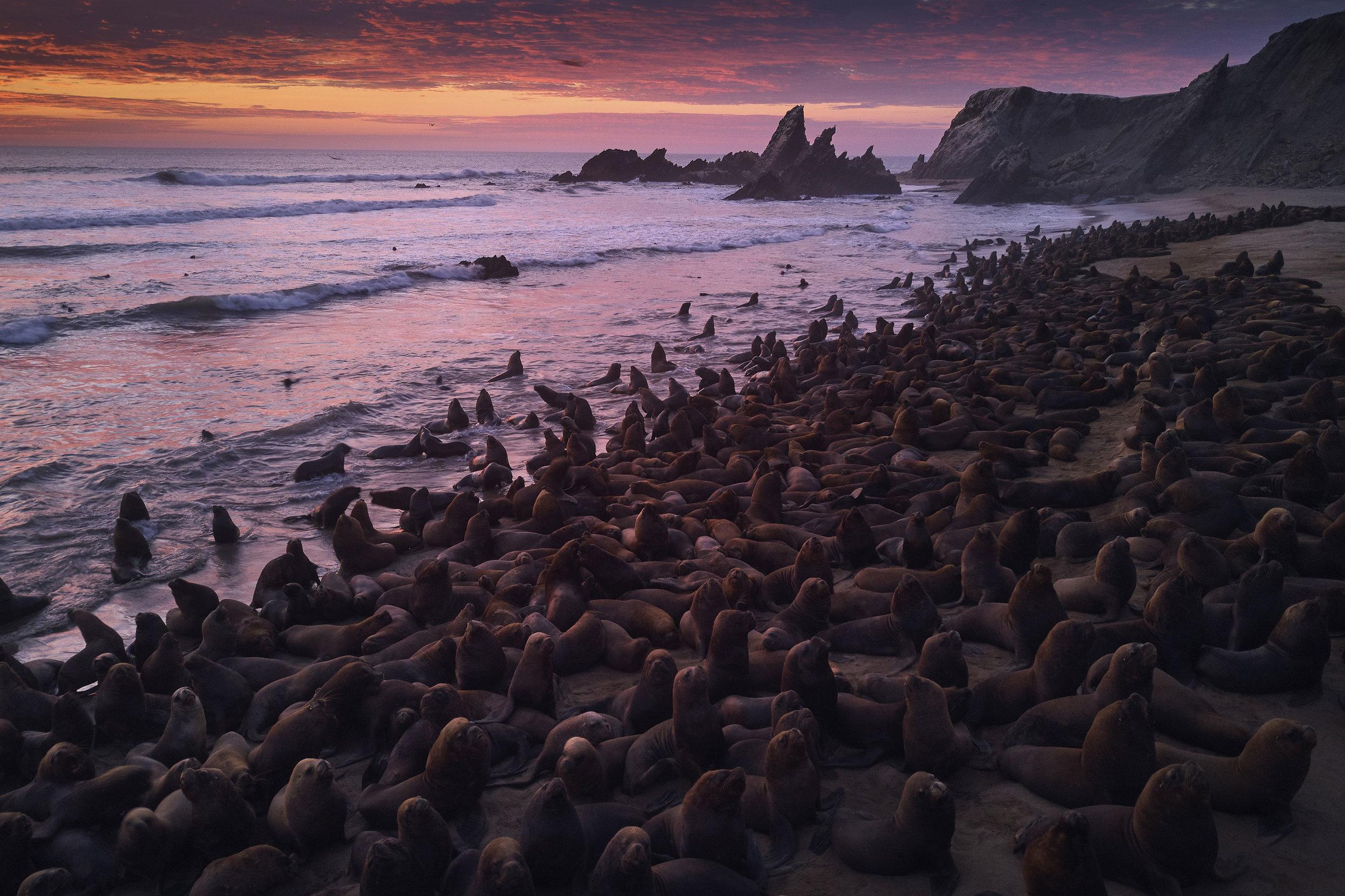 Sea lions Iiescas