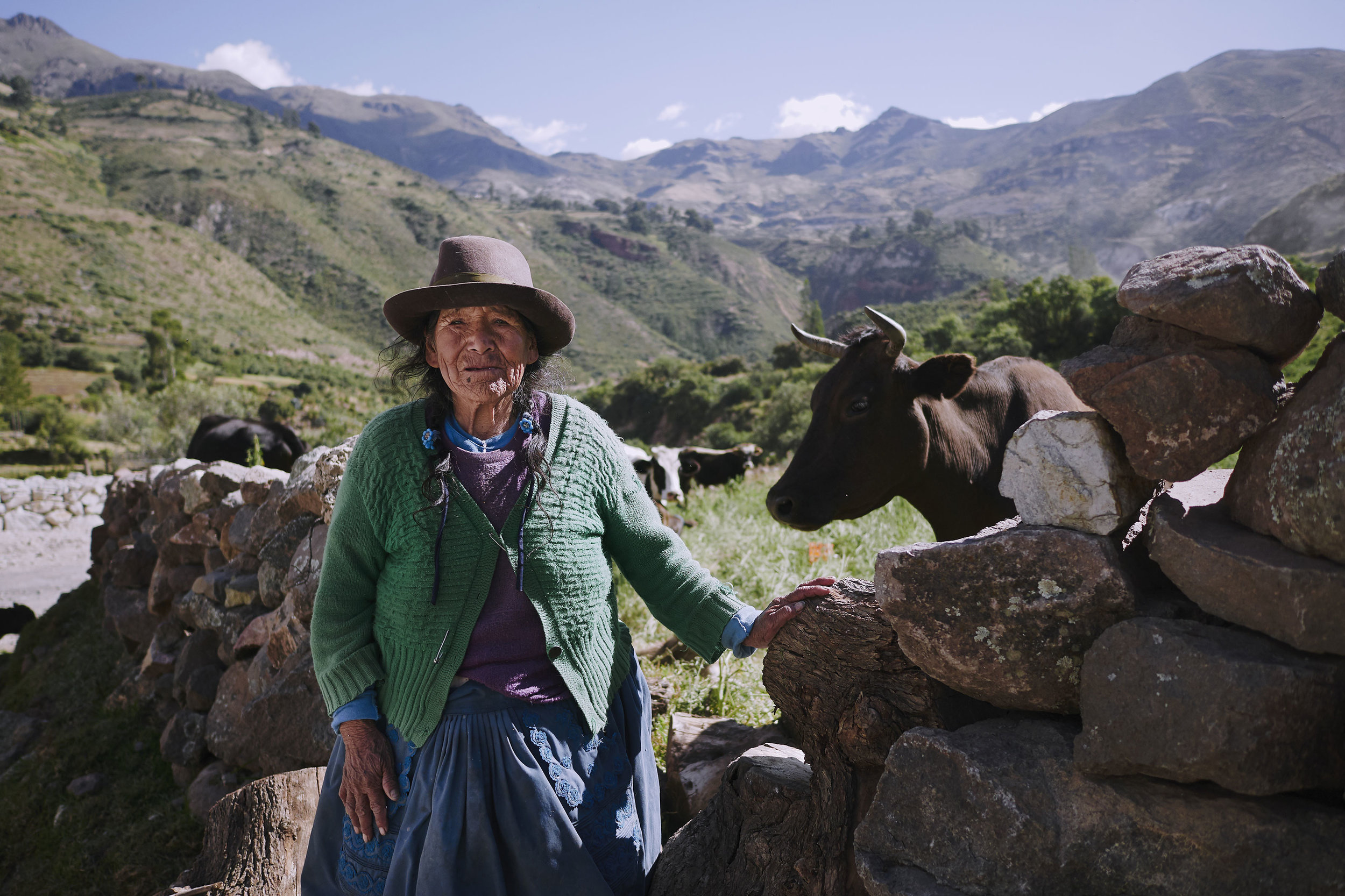 Peru woman with a cow