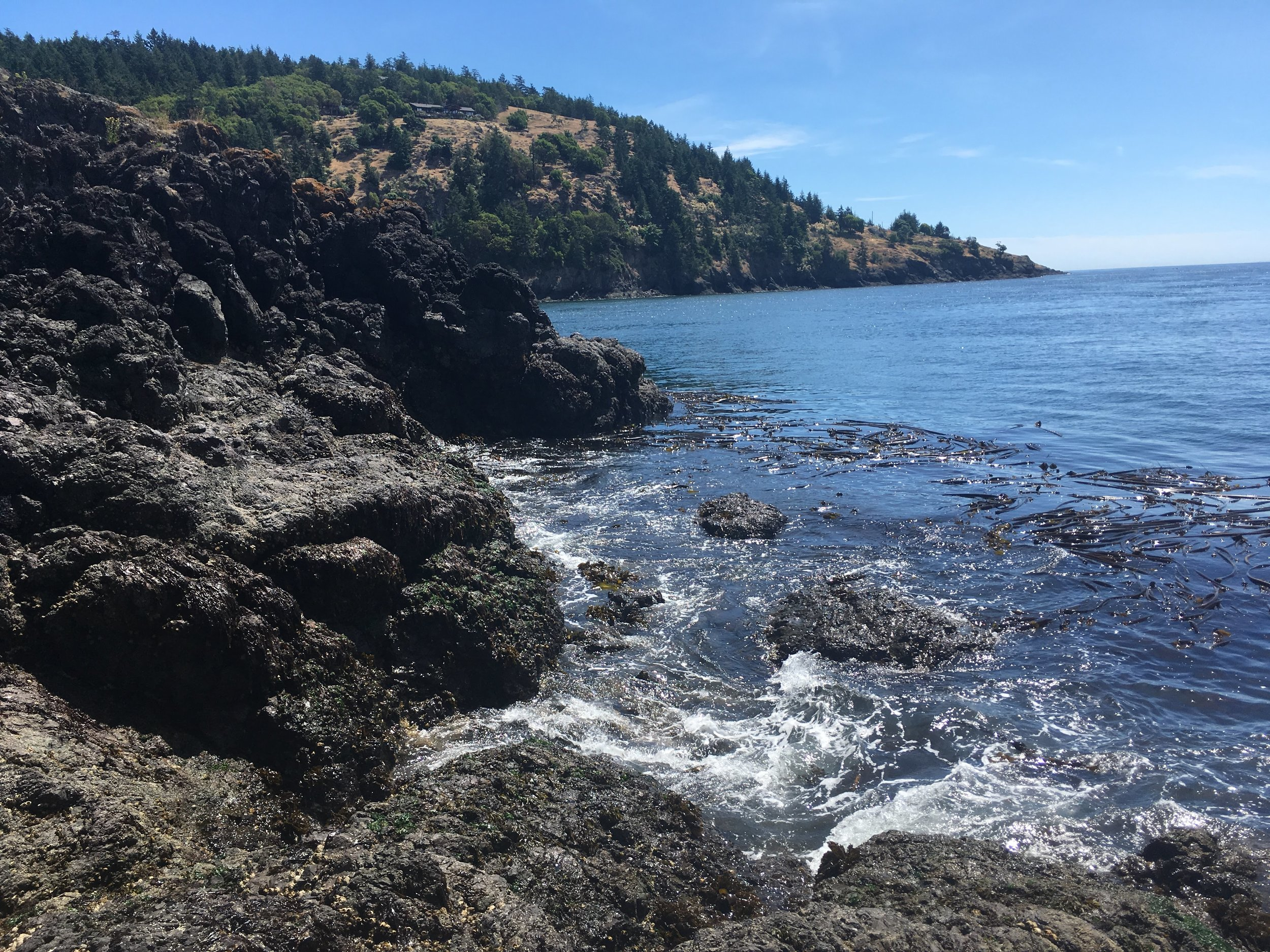 The coast off of Lime Kiln Point State Park (with Canada in the distance!!)