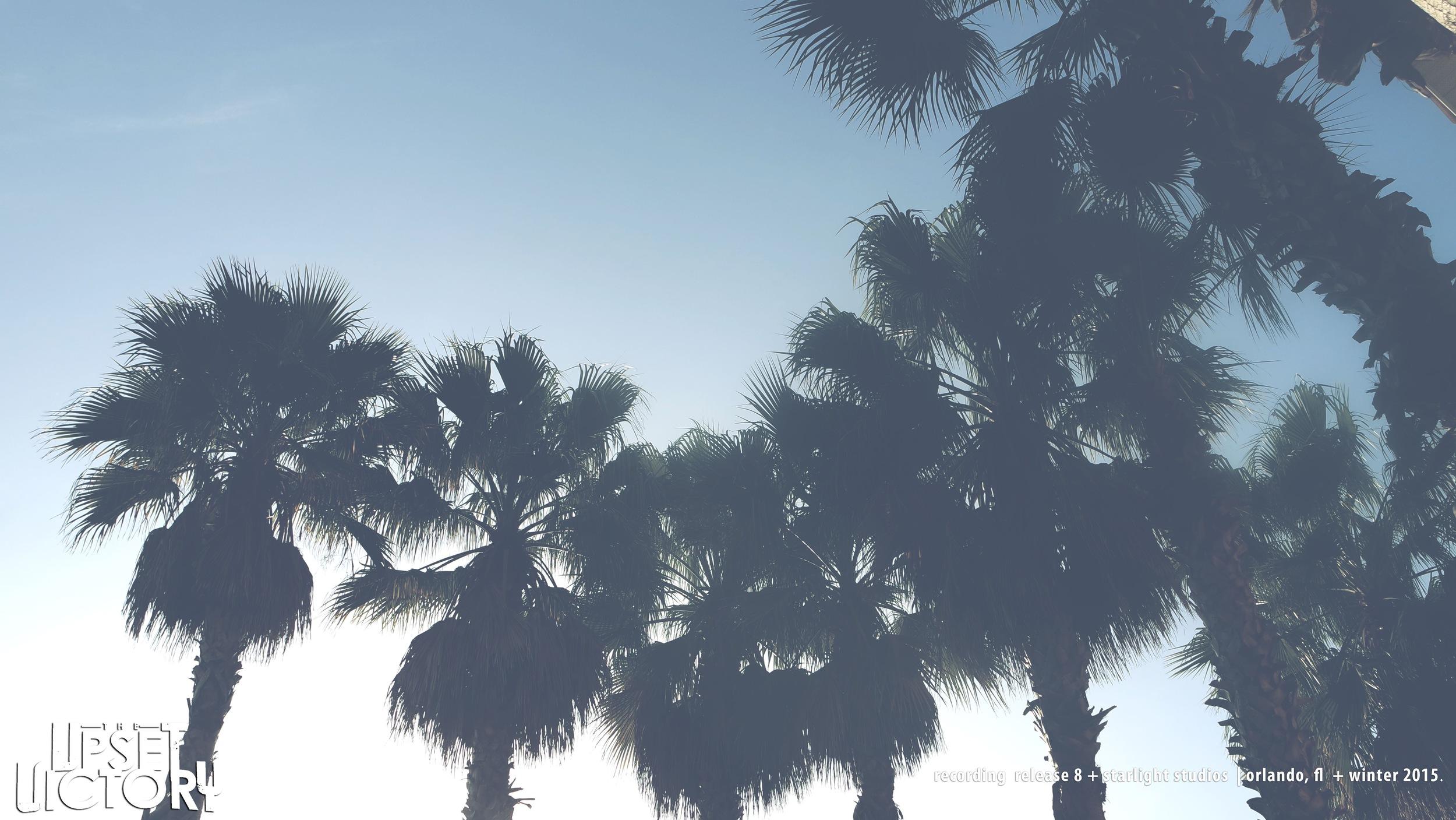 palmtreestuv.jpg