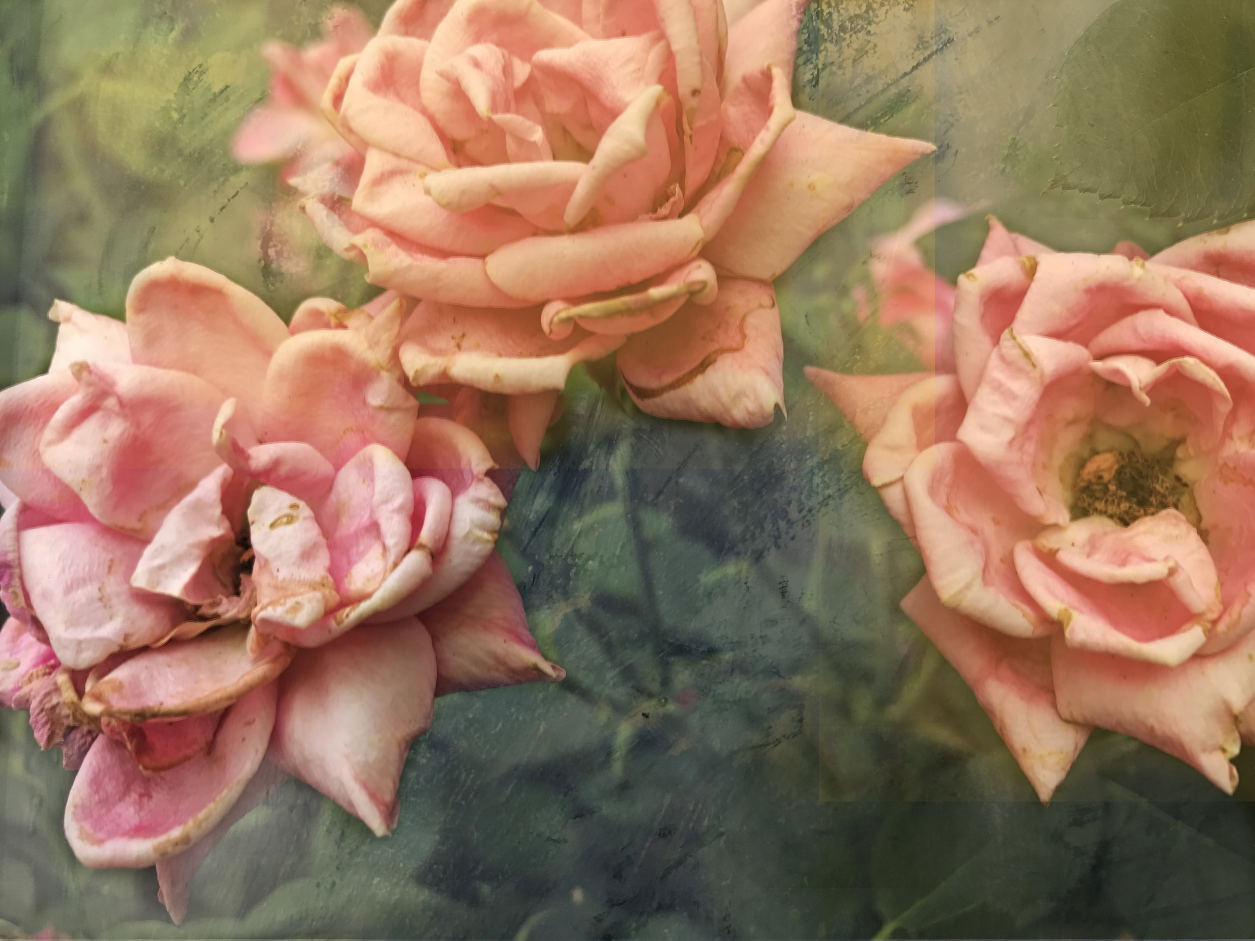 """Linda's Pink Ancient roses"" digital print on paper 8""X10 2018"