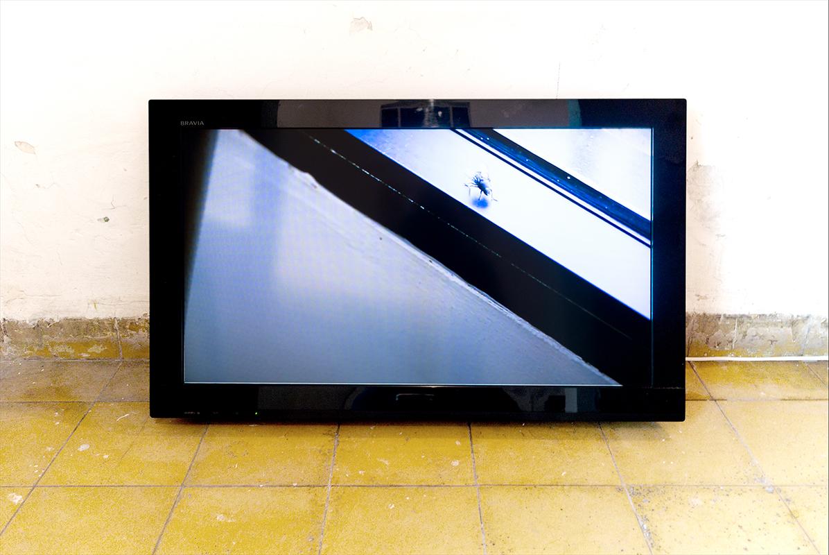 """Chantal Peñalosa, Atrapar la mosca, 2014, Video HD, 26' 26"""""""