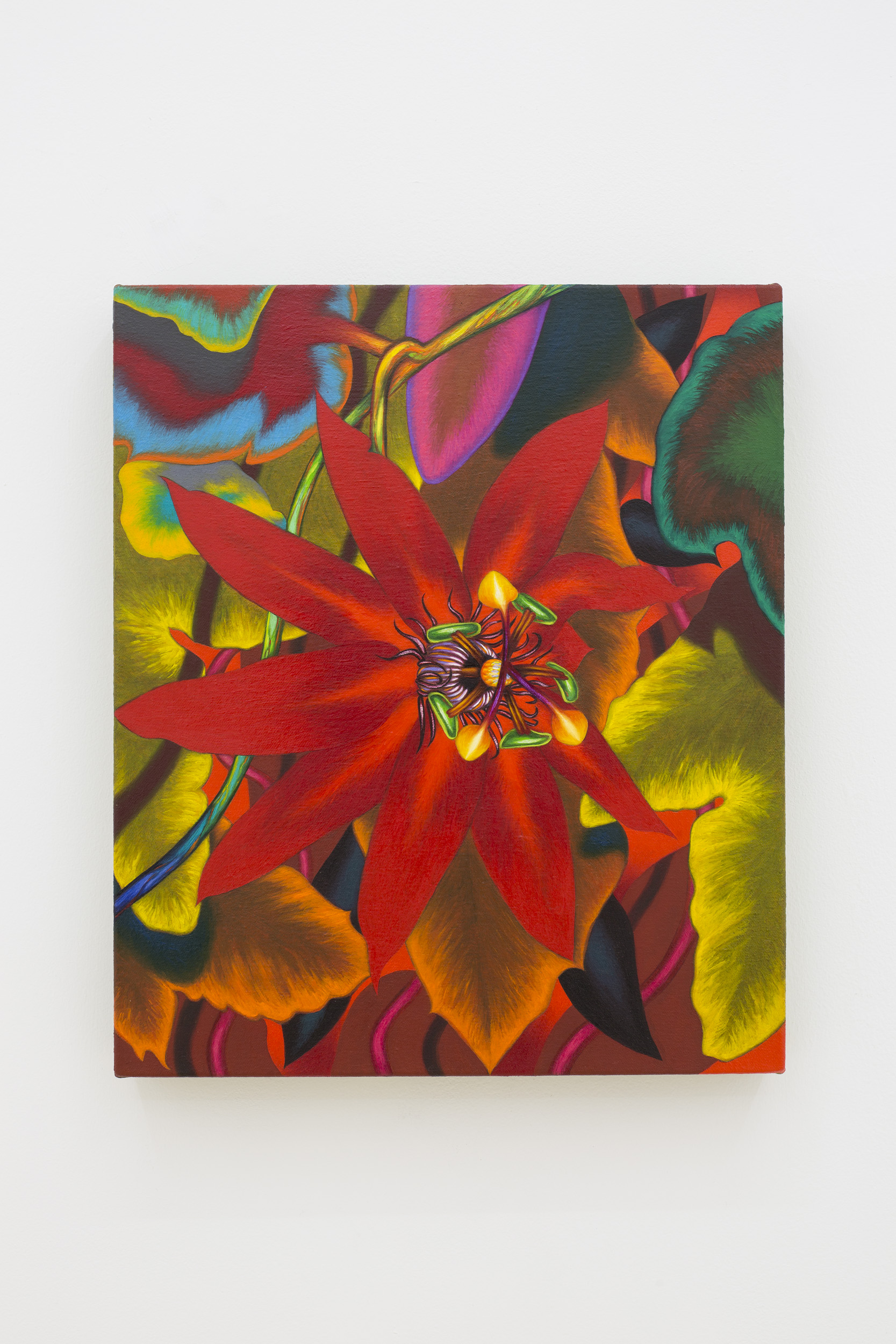 "Tom Allen ""Passiflora"", 2018. Oil on canvas, 33 x 28 cm (13 x 11 in.)"