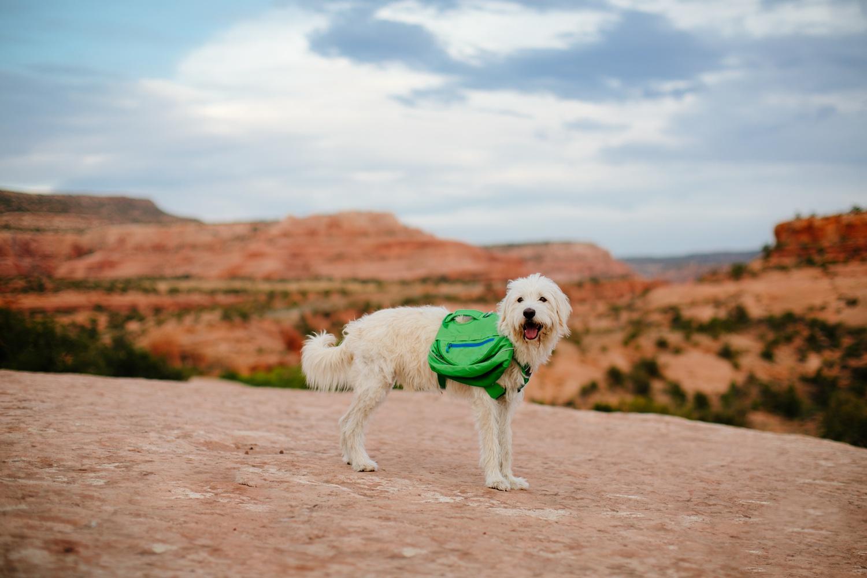 catie-bergman-adventure-elopement-photographer-utah-southwest-arizona-desert-catie-bergman-photography-pnw-newborn-portrait-lifestylephotography_0032.jpg