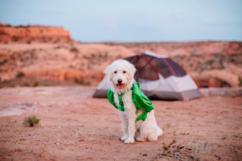 catie-bergman-adventure-elopement-photographer-utah-southwest-arizona-desert-catie-bergman-photography-pnw-newborn-portrait-lifestylephotography_0040.jpg