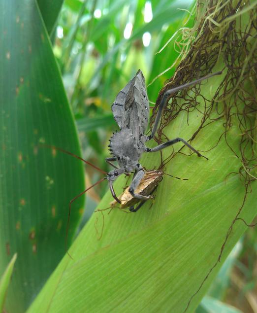 entomology.png