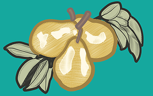 IllustratorPopUp_FruitIllustration-03web1.png
