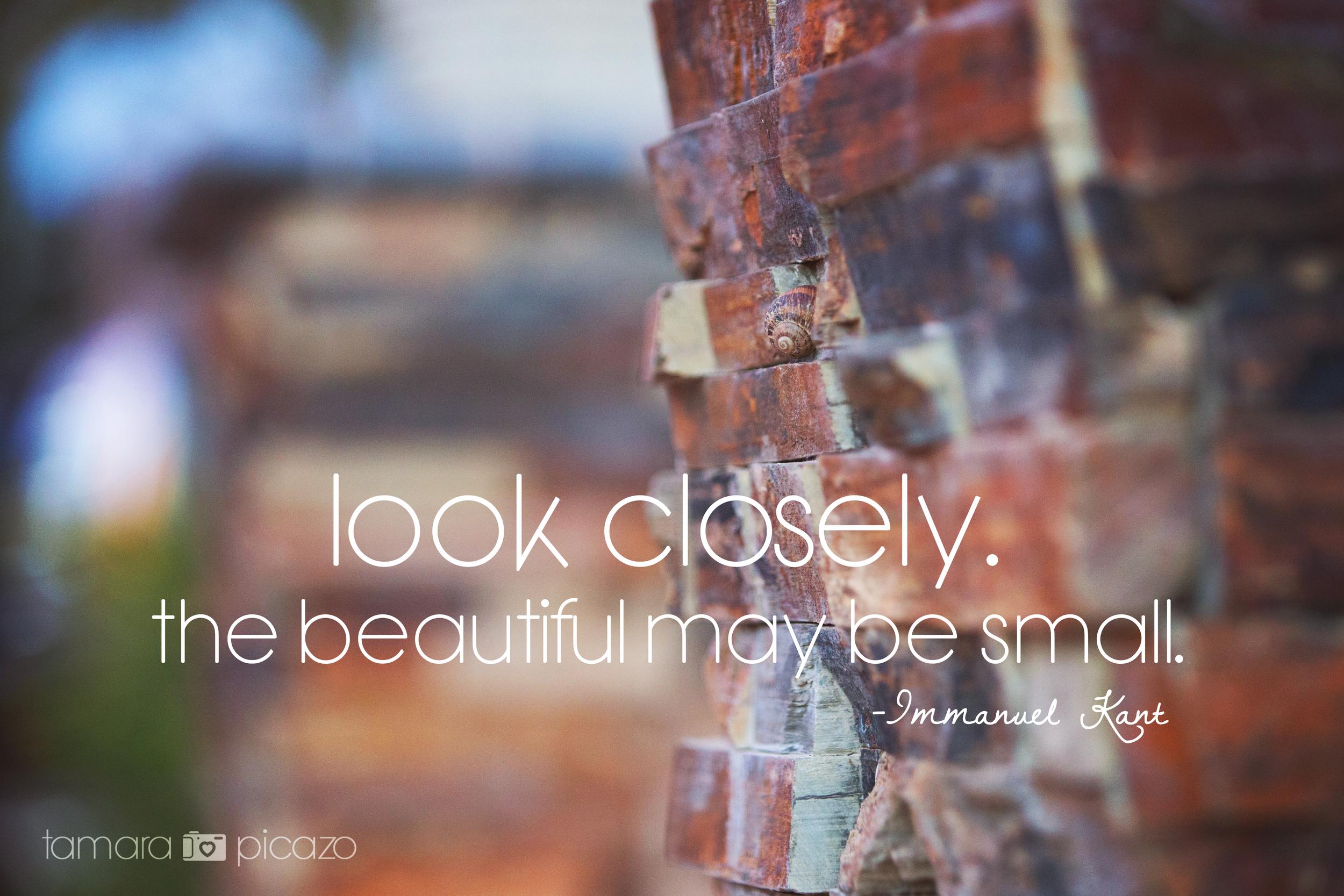 Look Closely.jpg