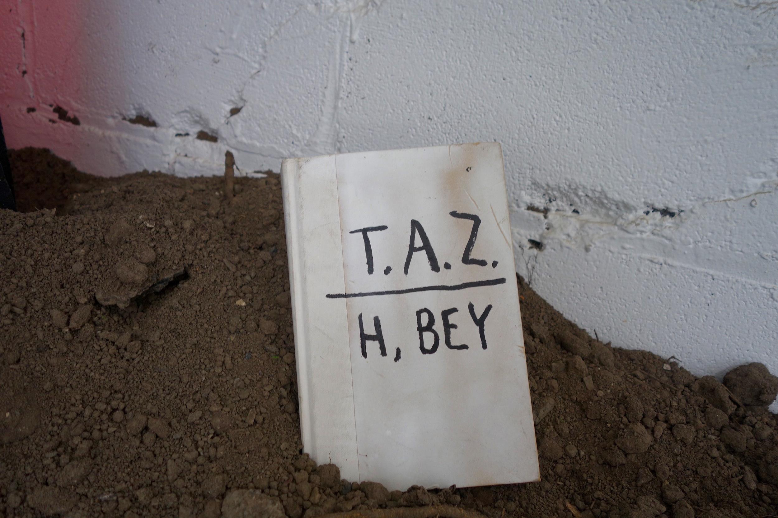 TAZ.jpg