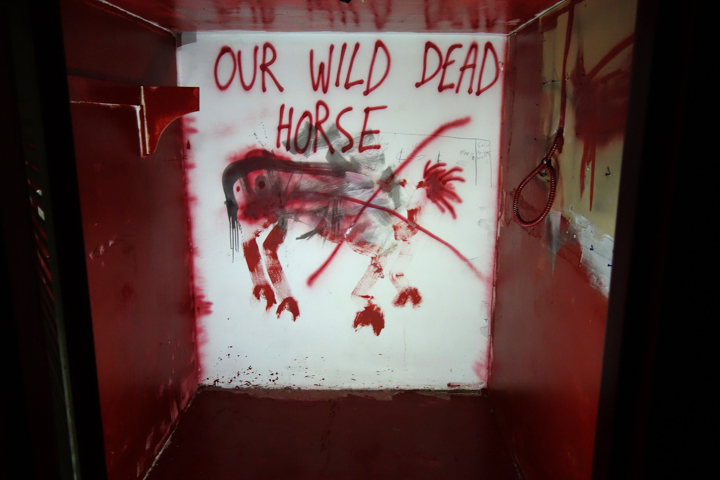 Our Wild Dead Horse room.jpg
