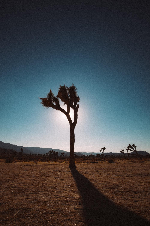 Amber Marlow Joshua Tree 6.jpg