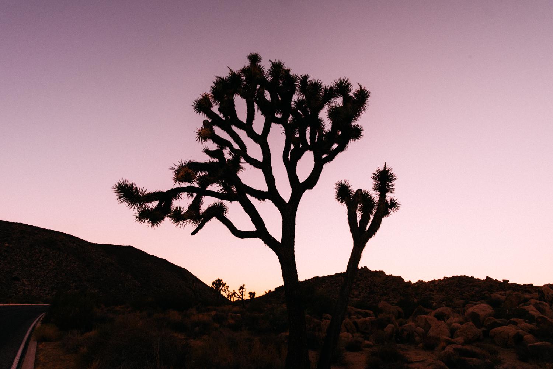 Amber Marlow Joshua Tree 25.jpg