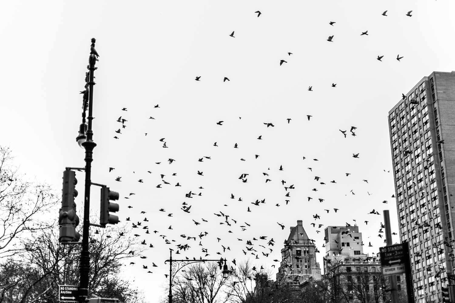 Birds flying around NYC on wedding day