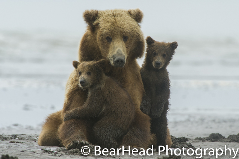 A mother and her cubs begin to wake from their nap and are very cuddly.