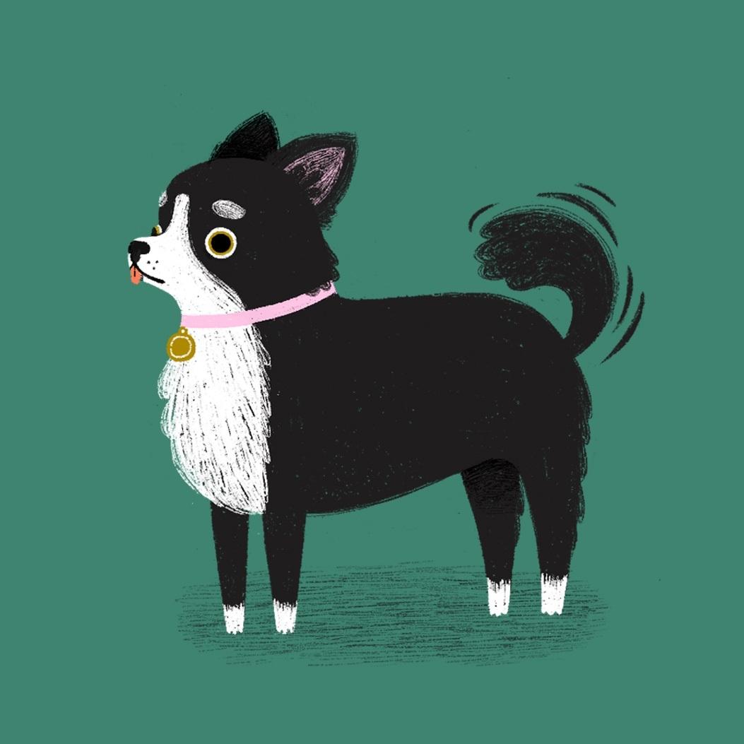 Chihuahua_SophieShow.jpg