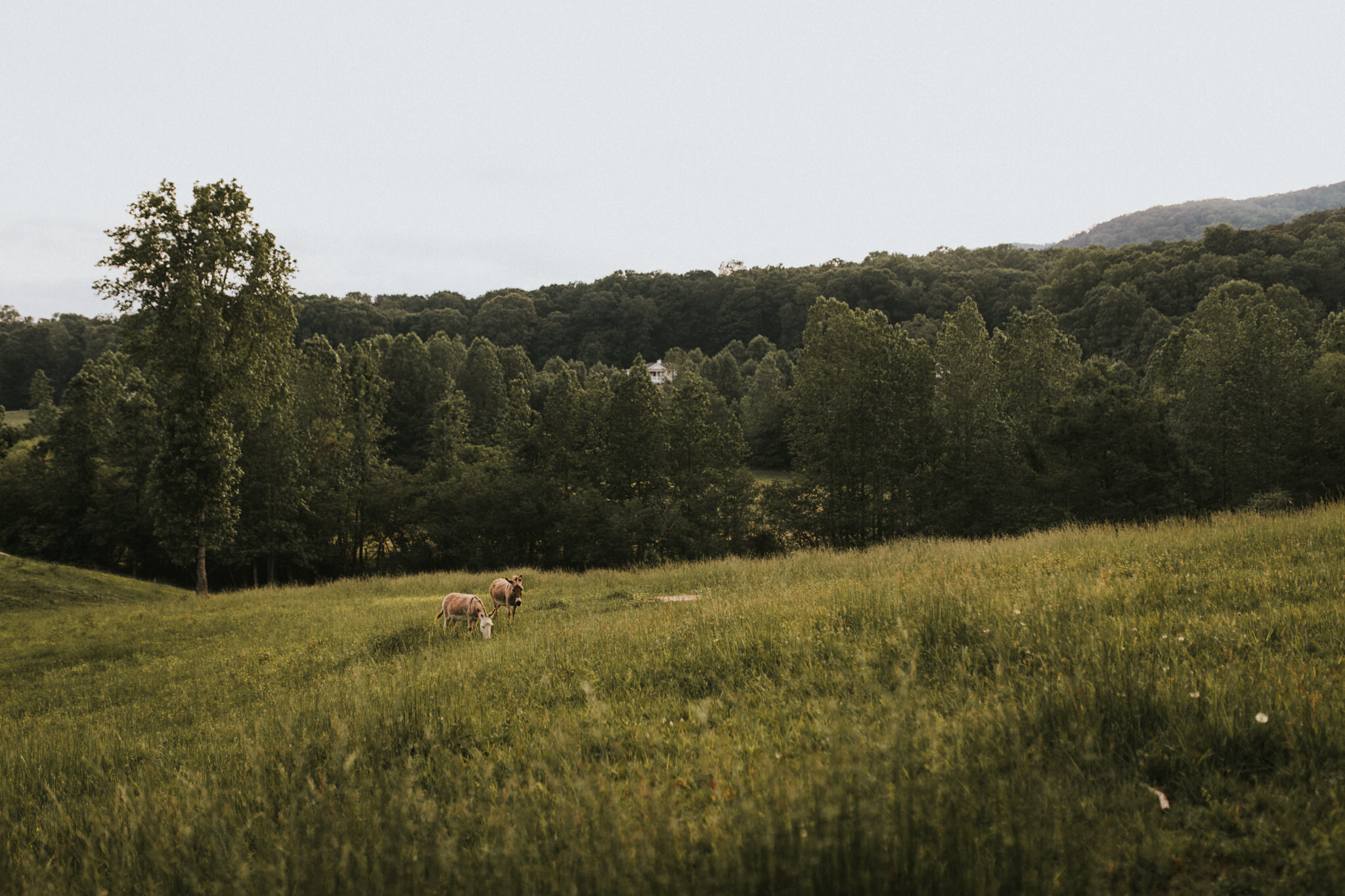 KateMatt-North-Georgia-Wedding-Photographer-Mountain-Laurel-Farm-140.jpg