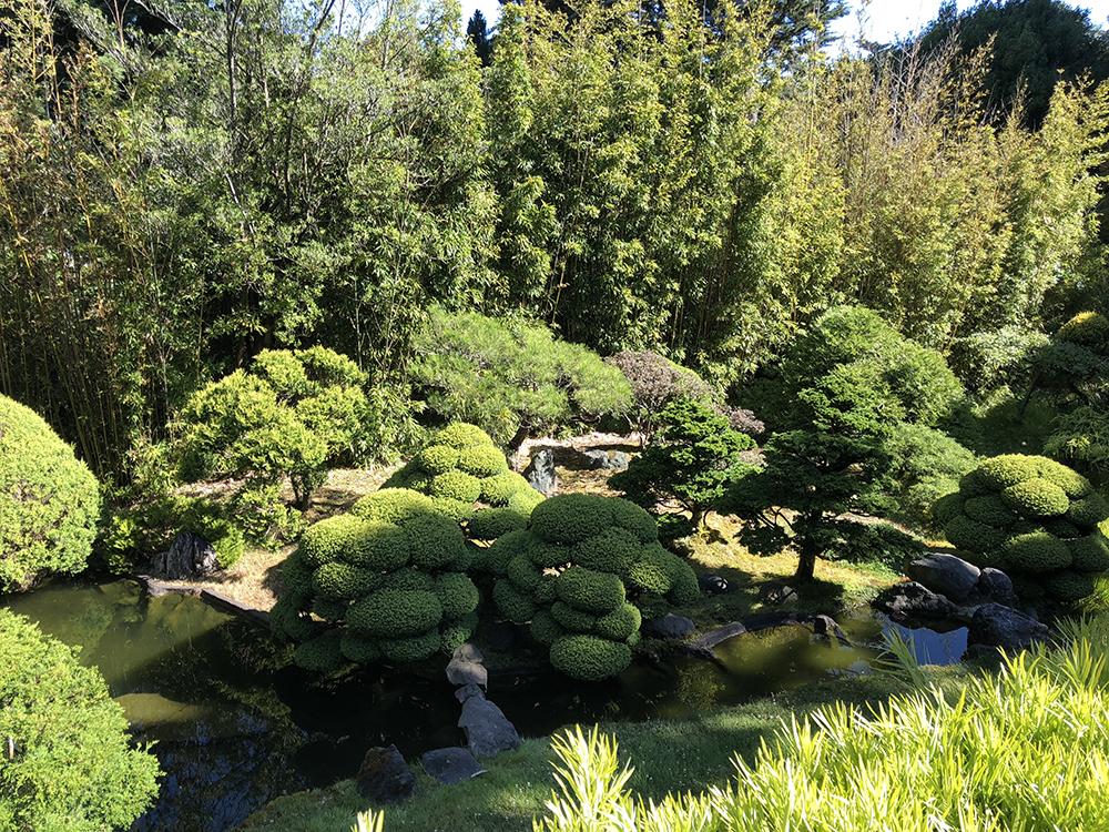 Japanese Tea Garden - look at those shrubs. So tidy!