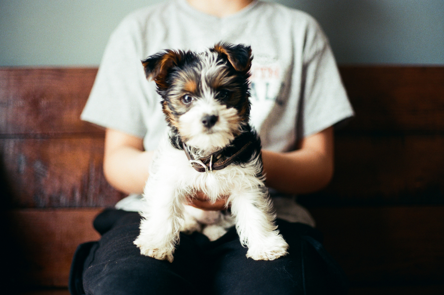 Boy and Yorkie puppy