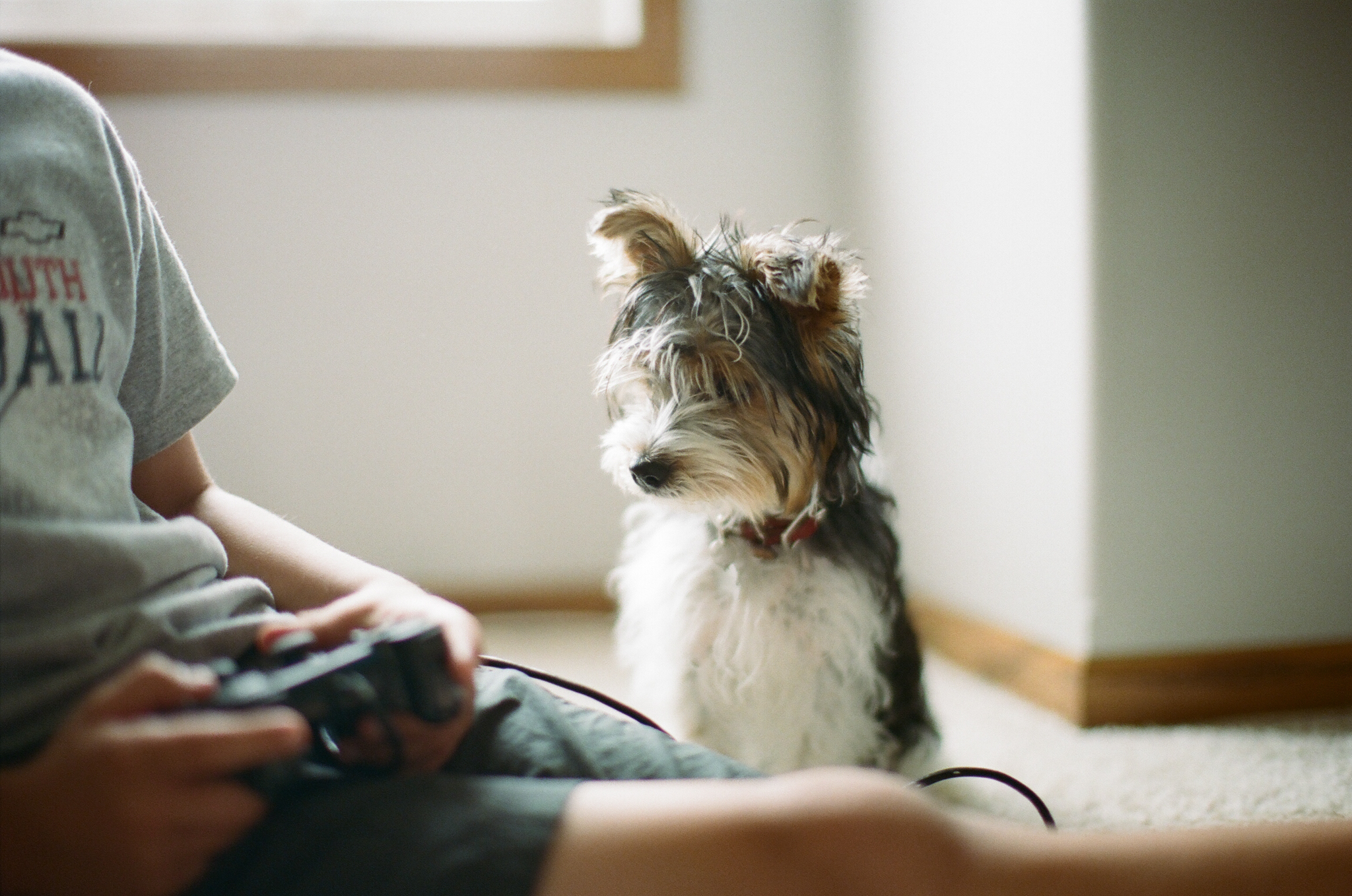 Boy and puppy gaming