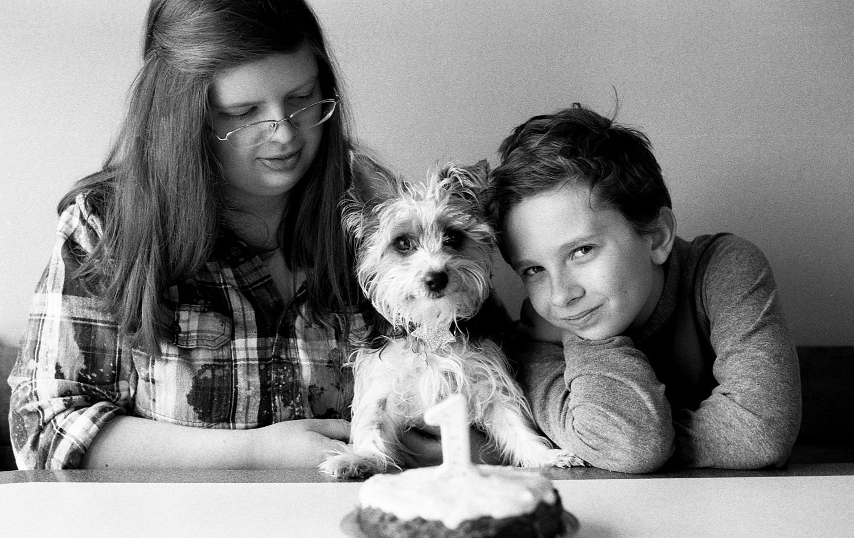 Celebrating a yorkie puppies 1st birthday.