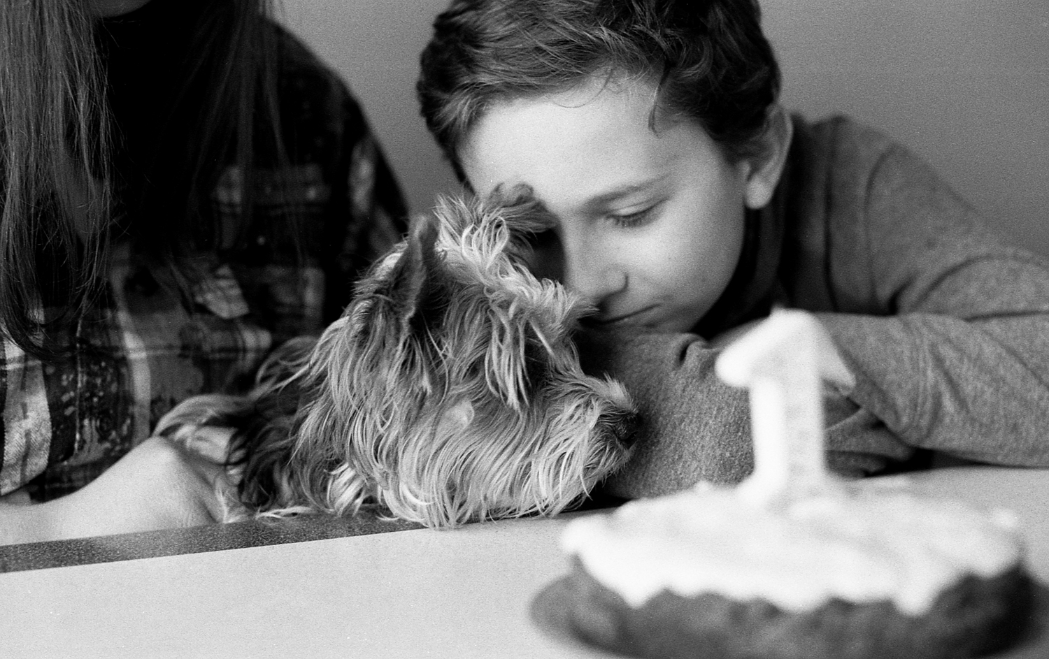 Young boy celebrating his yorkie puppies birthday.