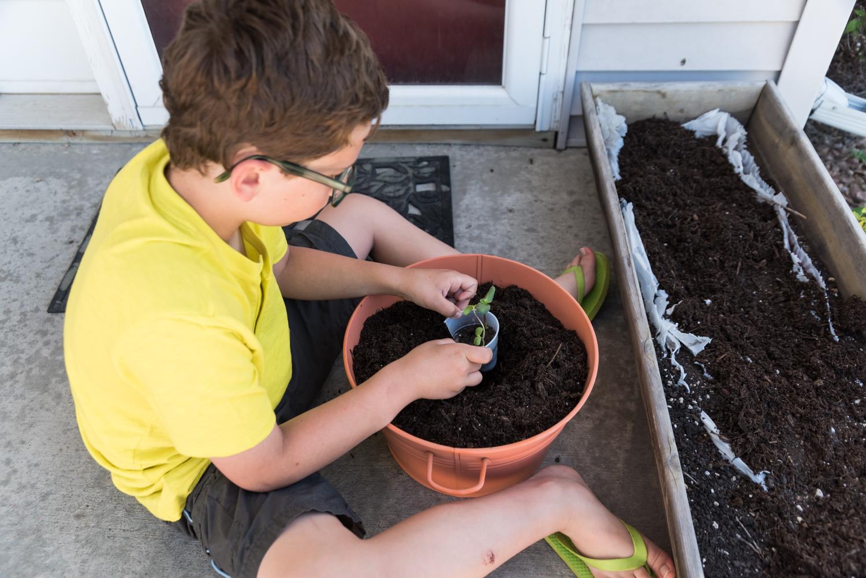 A boy placing sunflower seeds in potting soil in Fargo.